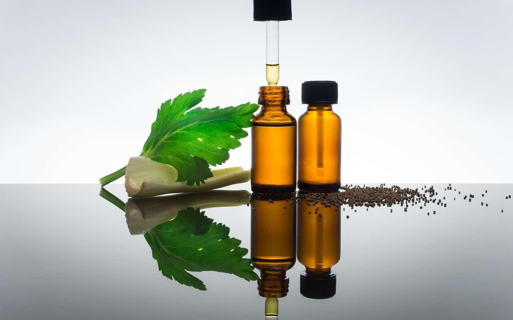 L'huile essentielle de céleri permet de lutter contre la mauvaise haleine. © Serenacar, Fotolia