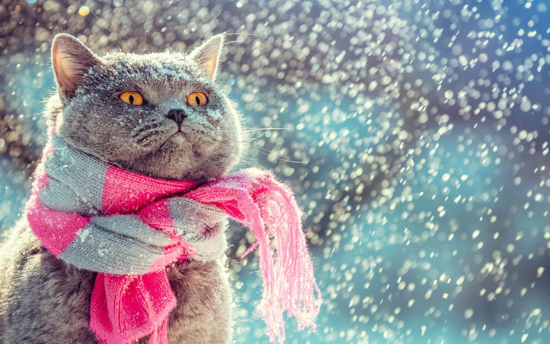 Pour protéger votre chat du froid, il n'est pas nécessairement utile de lui faire porter une écharpe. © vvvita, Fotolia