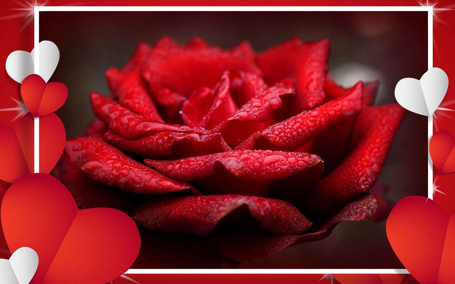 Comment les amoureux fêtent la Saint-Valentin dans le monde ? © DP