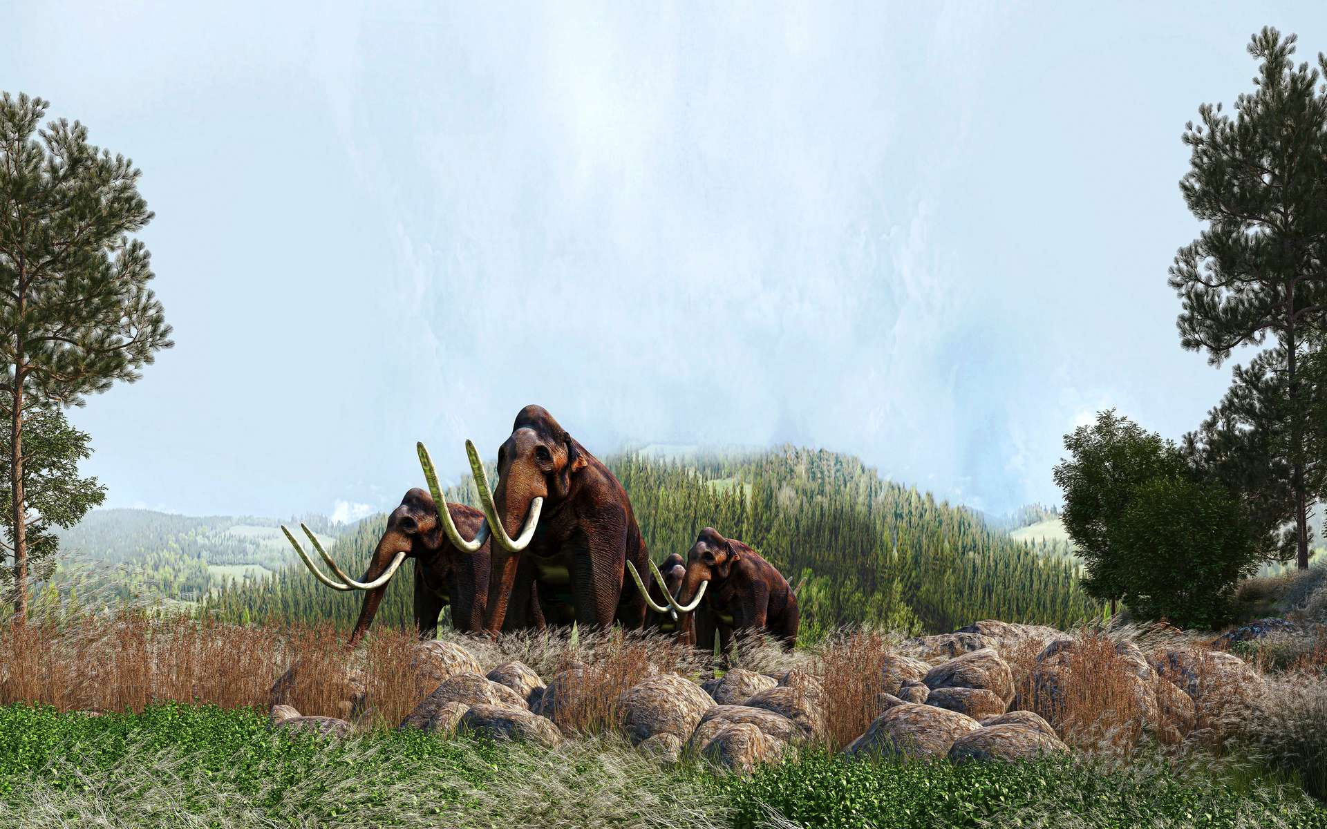 Au nord du Mexique, des archéologues viennent de découvrir 200 squelettes de mammouths. Et ce chiffre va probablement augmenter. © LaCozza, Adobe Stock