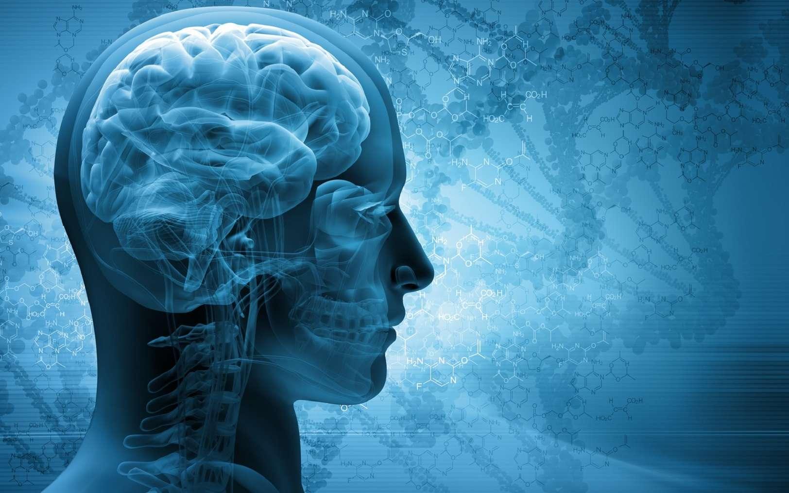 Un cerveau gros permet de trouver plus facilement des solutions aux problèmes posés par le milieu de vie. © adimas, Fotolia