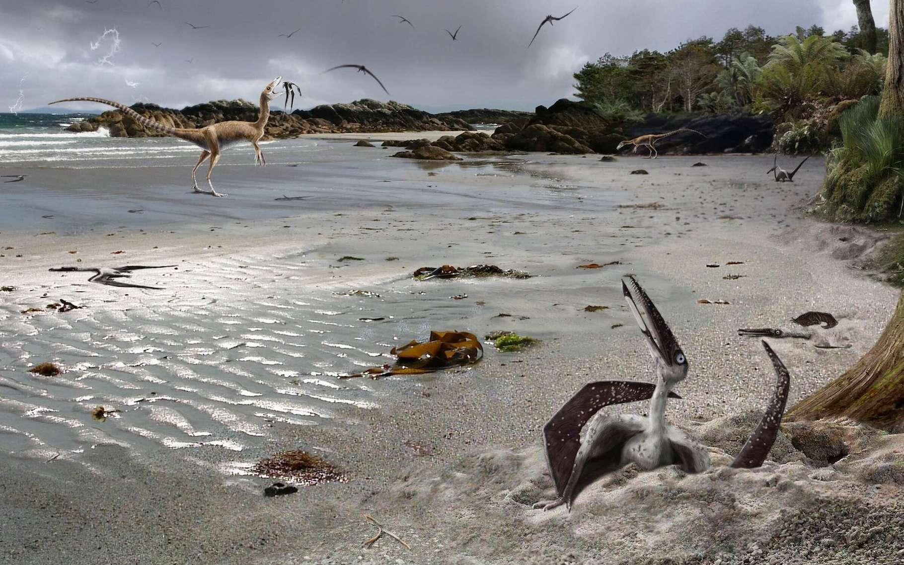 Une étude suggère que les ptérodactyles, contrairement à tous les autres vertébrés volants, étaient capables de voler dès leur naissance. Sur cette vue d'artiste, un tout jeune ptérodactyle, à peine sorti de l'œuf. © James Brown, Université de Leicester