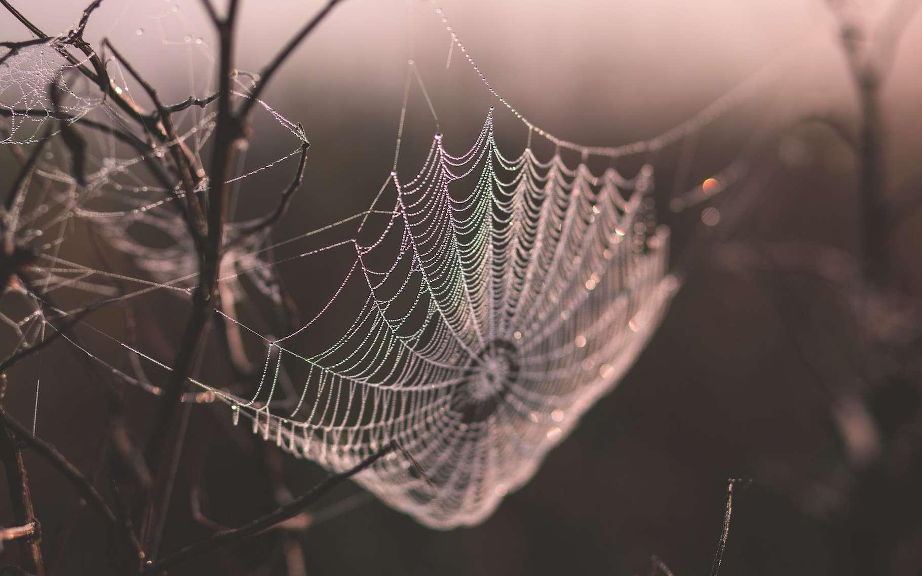 La soie d'araignée est réputée être le matériau biosourcé le plus résistant à la rupture en traction. Des chercheurs suédois pourraient bien faire mentir cette réputation. © freestocks.org, Unsplash