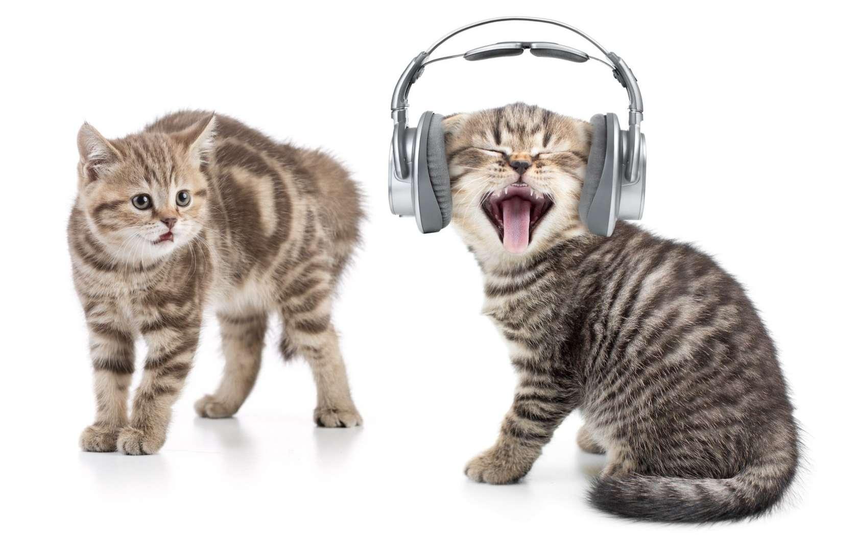 Le chat est moins sensible à la musique classique qu'à la musique pour chats. © Andrey Kuzmin, Fotolia