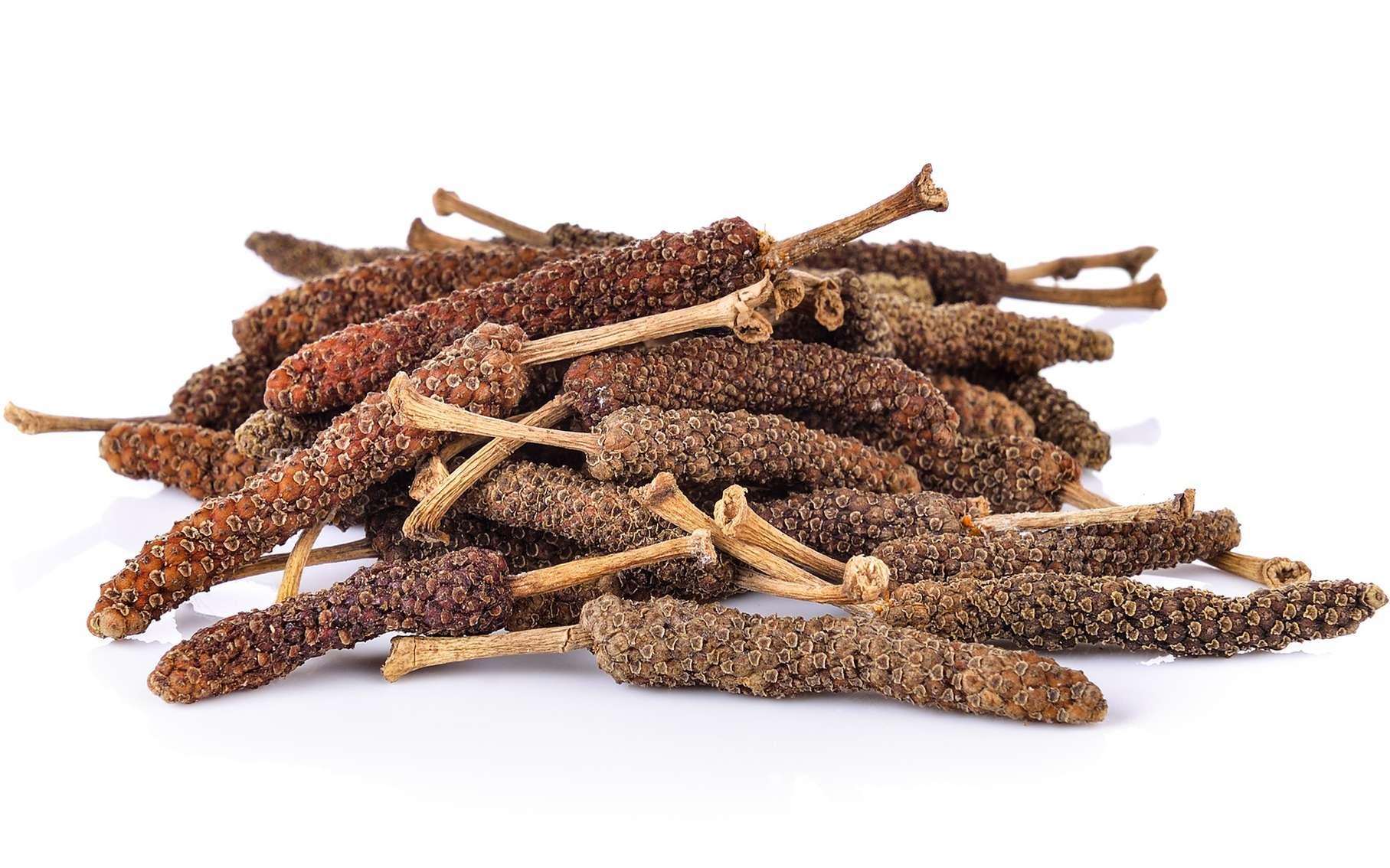 Le poivre long (Piper longum) est une épice indienne connue pour ses propriétés anticancéreuses. © sommai, Fotolia