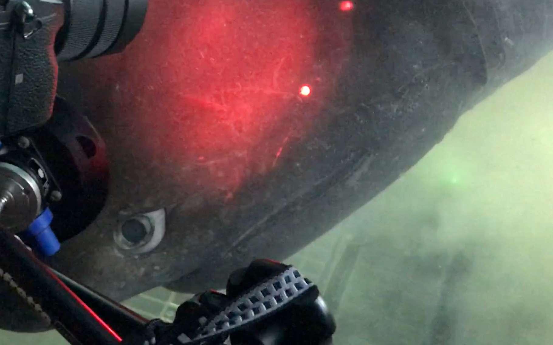Le dernier plongeon de l'expédition menée par des chercheurs de l'université de l'État de Floride (États-Unis) a été l'occasion d'une rencontre rapprochée avec une imposante femelle requin-griset © Gavin Naylor, Florida Museum