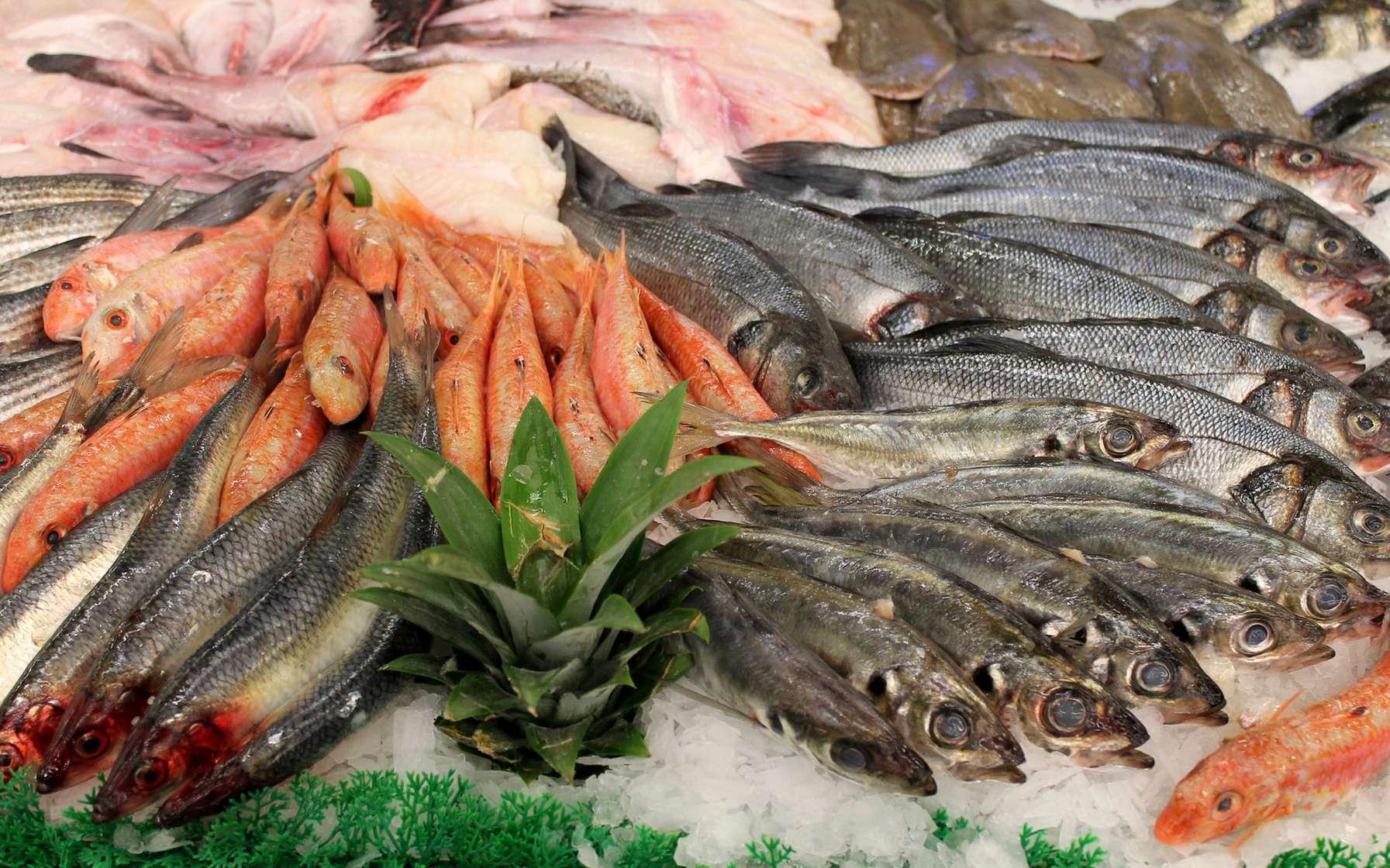 beaucoup de rencontres de poissons en Irlande brancher Moreno vallée