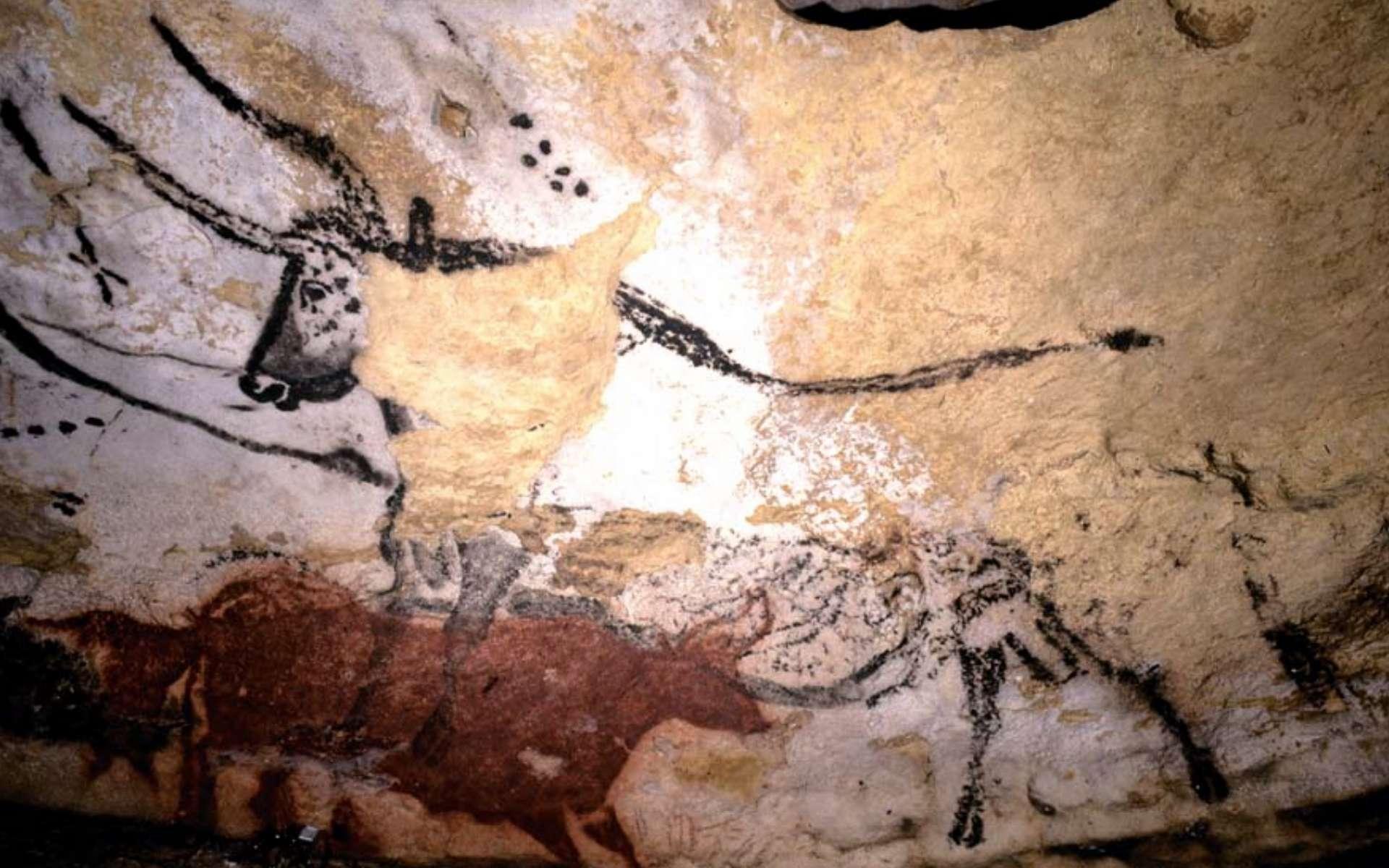 Des aurochs peints sur les murs de Lascaux. © Musée d'archéologie national
