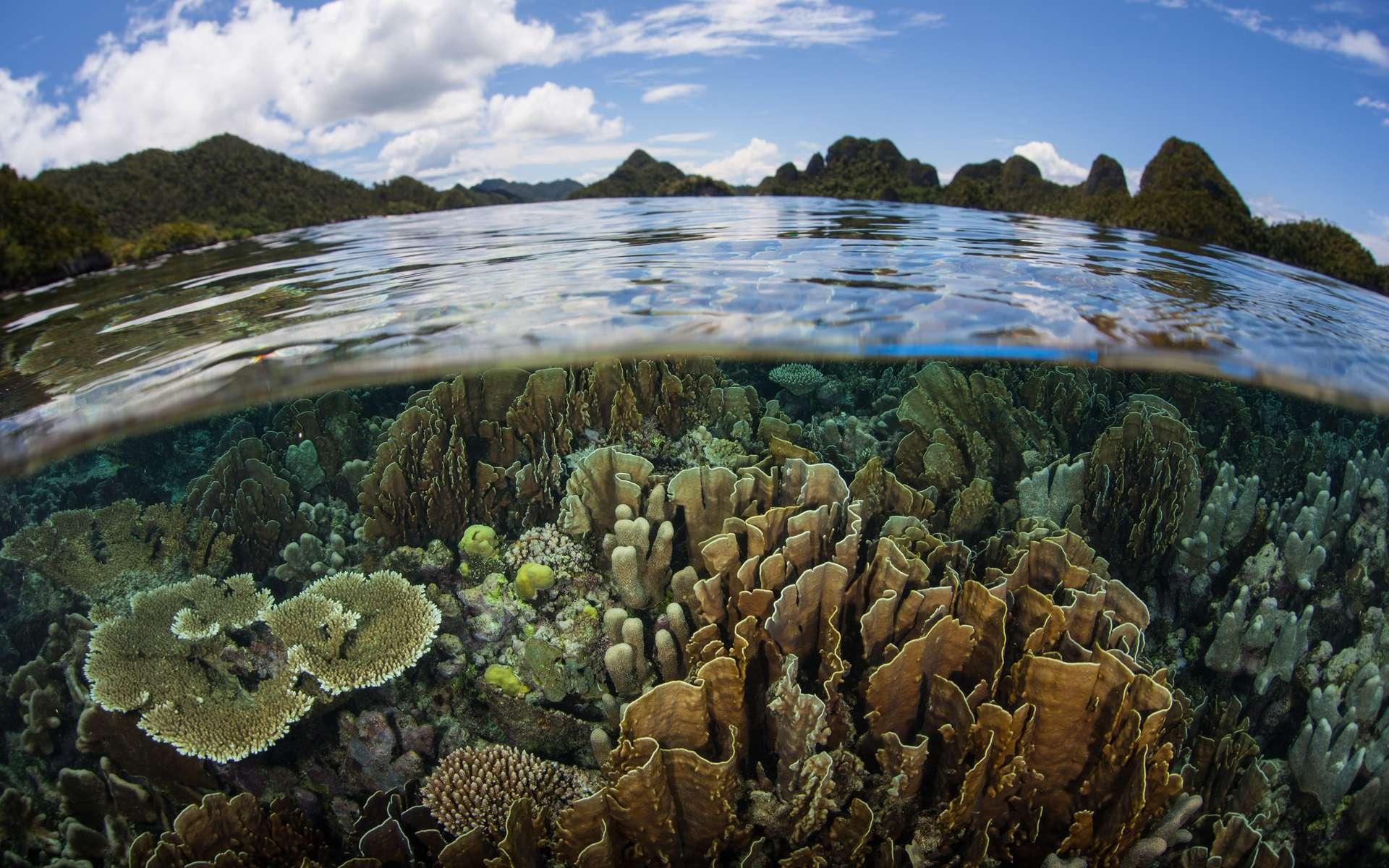 Aujourd'hui, on ne connaît que 10 % de la biodiversité estimée, c'est-à-dire 2 millions sur 20. © ead72, Adobe Stock