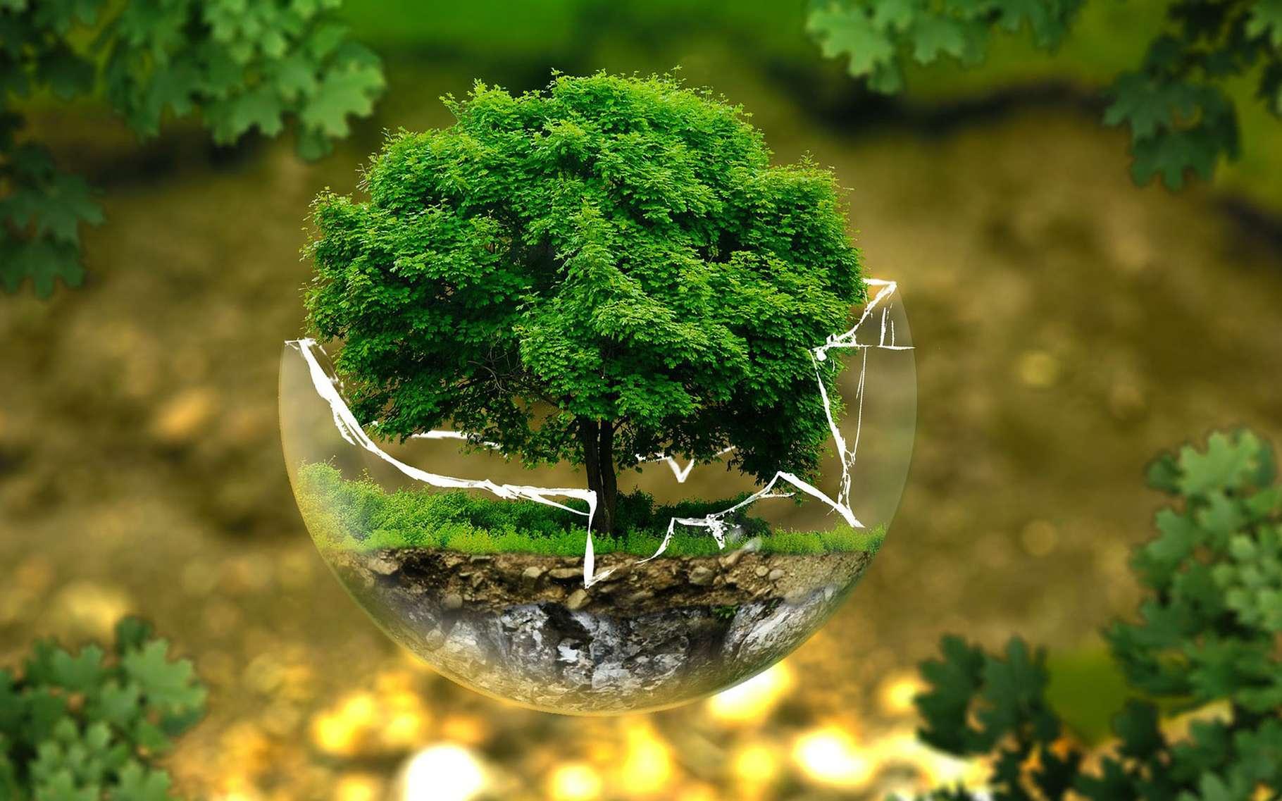 Qu'est ce qu'un arbre gracieux ? © Ejausburg, Pixabay, DP