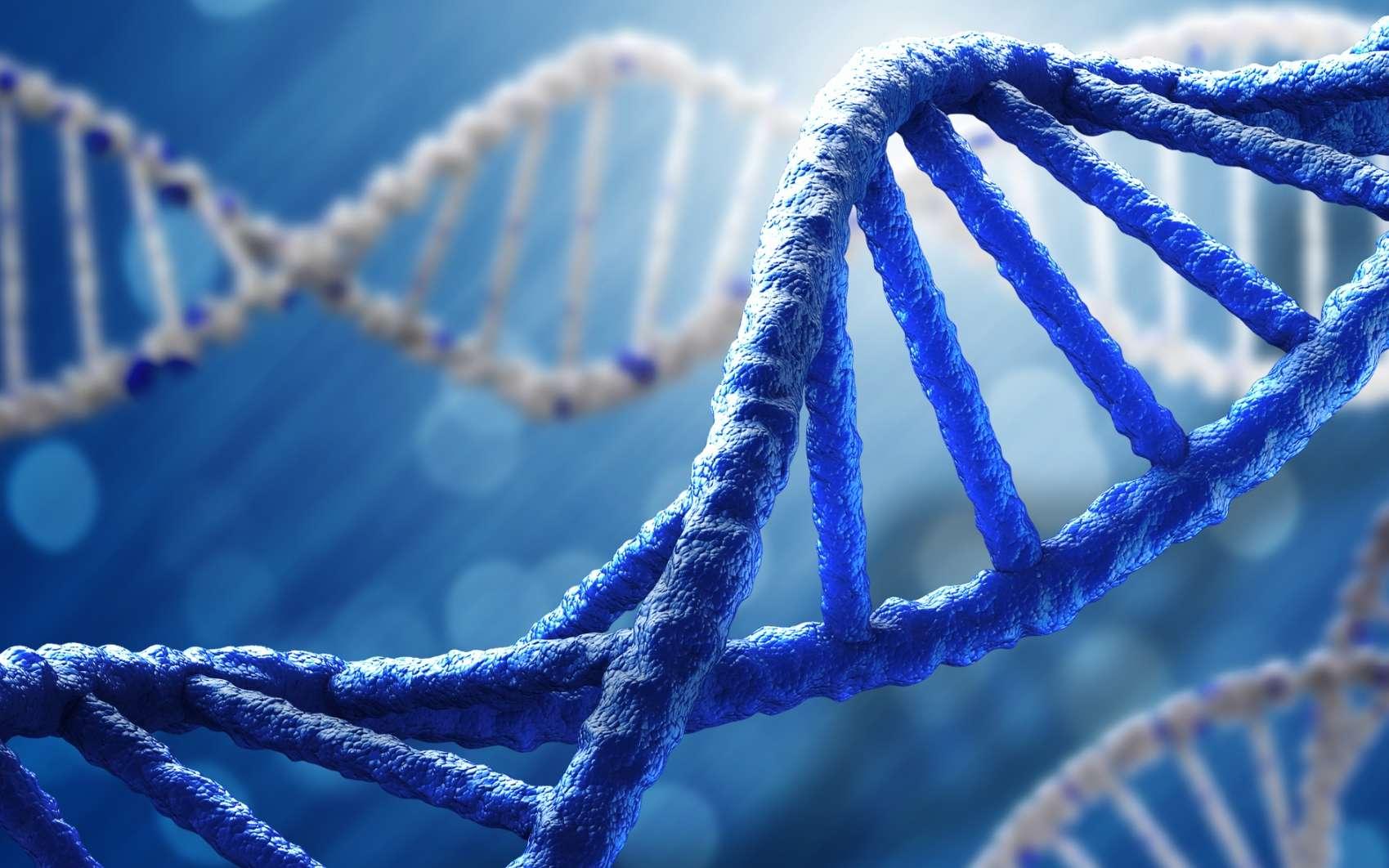 La double hélice de l'ADN porte des bases azotée qui s'associent par paires pour donner le code porteur de l'information génétique. Modifier ces bases, ce que font les mutations, affecte donc cette information et peut conduire par hasard à des organismes mieux adaptés à l'environnement. Un taux de mutation élevé pouvait donc accélérer l'évolution. © Sutterstock, Sergey Nivens