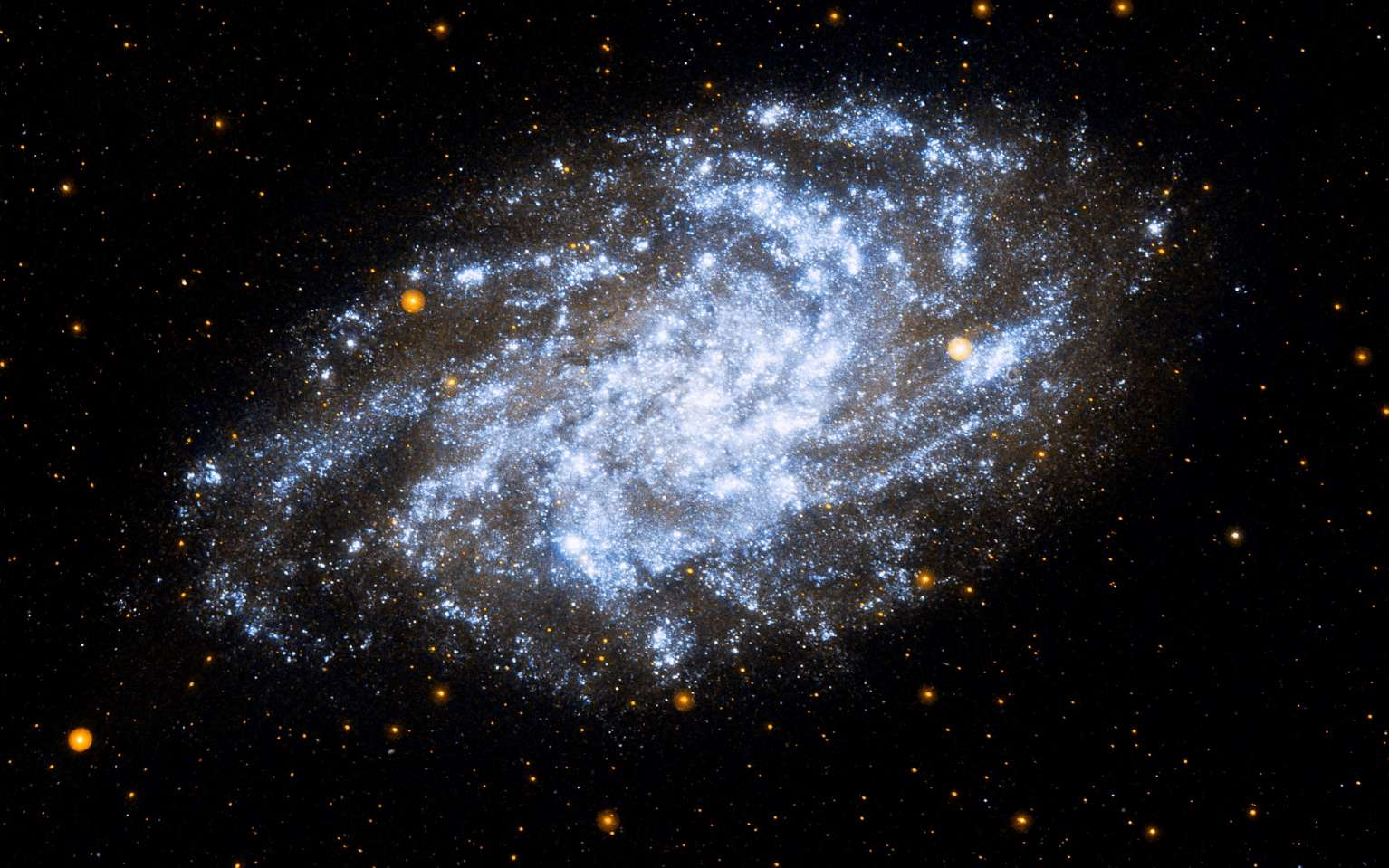 L'énigme de la matière noire et des galaxies naines est-elle enfin résolue ? Ici, la galaxie du Triangle, également appelée M33, est une galaxie située dans la constellation du Triangle. Elle est sans doute satellite de la galaxie d'Andromède ; sa distance à la Voie lactée est assez mal connue, de l'ordre de 2 à 3 millions d'années-lumière. Sa masse est évaluée à 60 milliards de masses solaires, dont près de 85 % serait sous forme de matière noire. On la voit ici observée dans l'ultraviolet par le satellite Galex. © Nasa