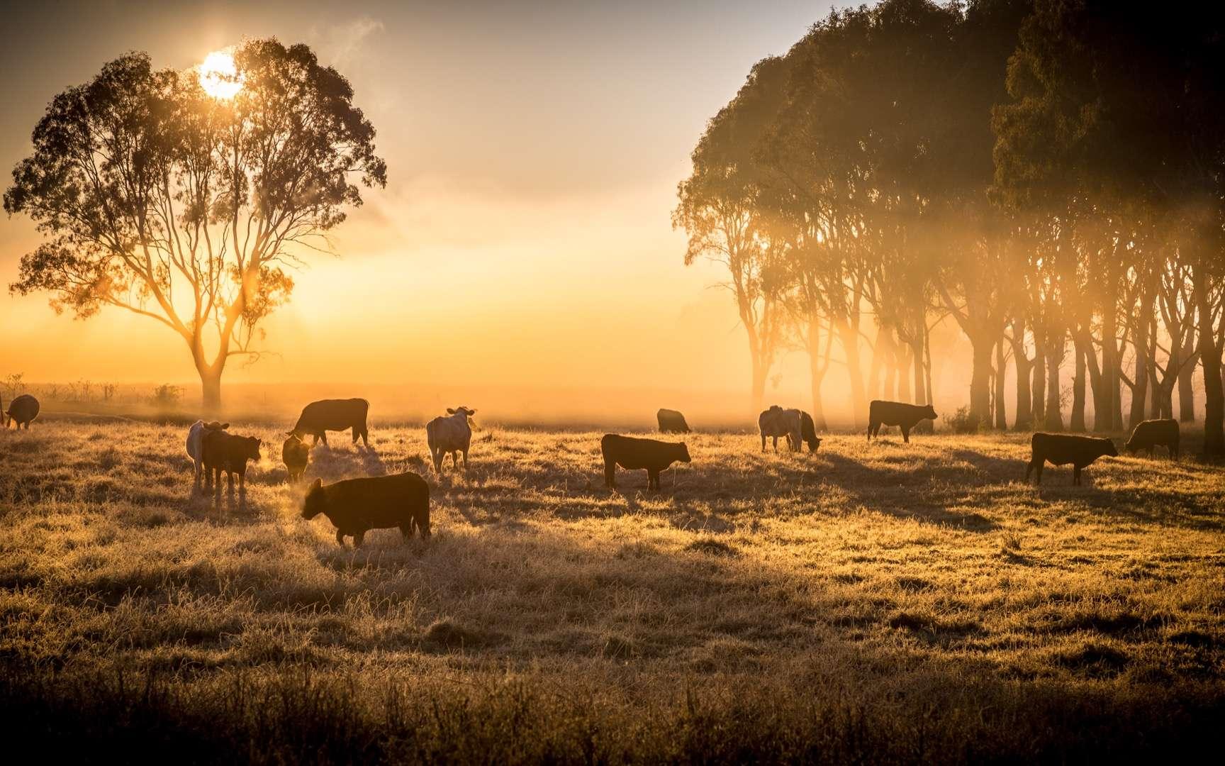 L'Australie, ravagée par les feux de forêts et par la sécheresse, depuis septembre, voit sa production agricole chuter de plus de la moitié. © Pelooyen, Adobe Stock