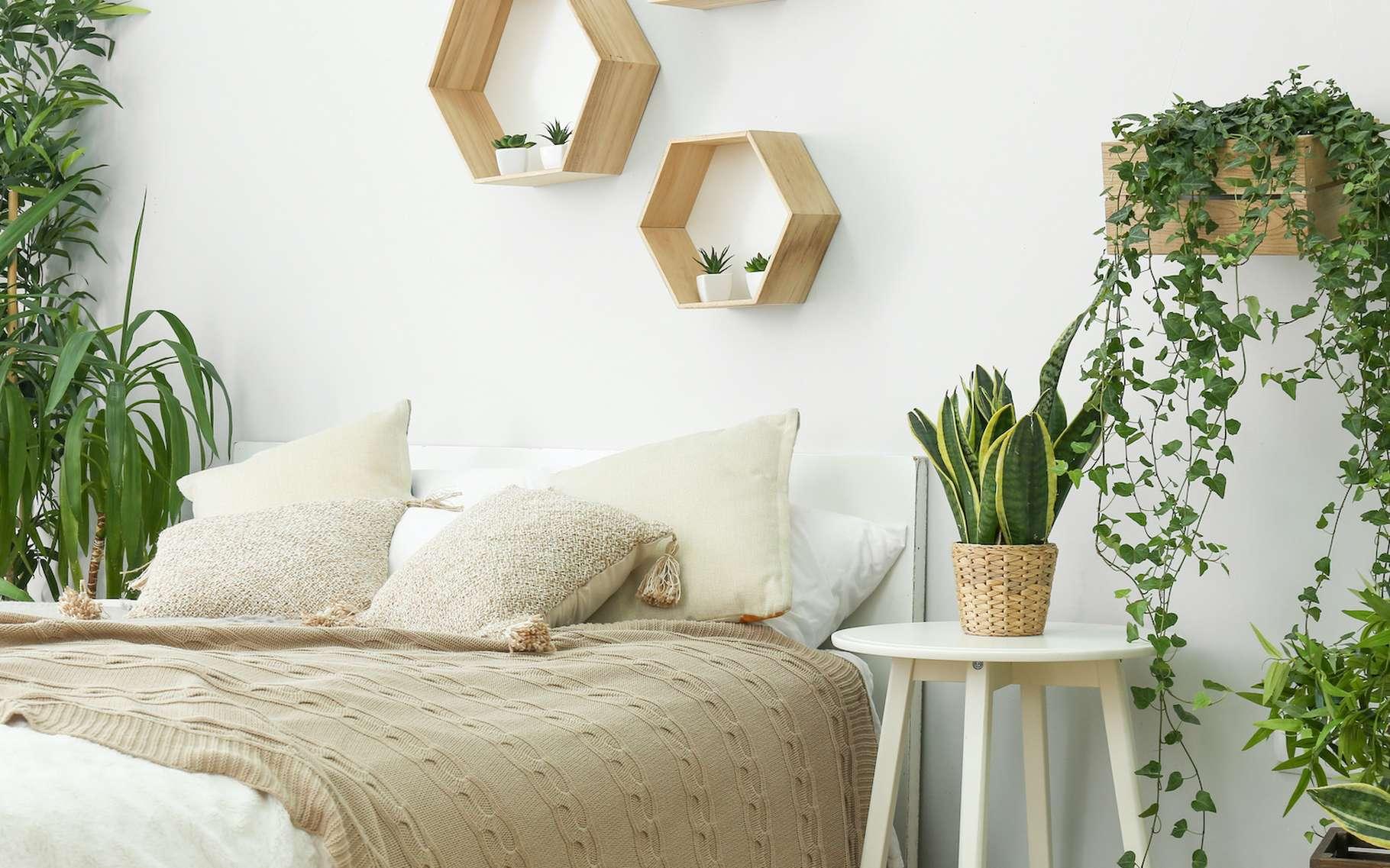 Si vous aimez le vert, n'hésitez pas à placer quelques plantes dans votre chambre. Il n'y a aucun danger. © Pixel-Shot, Adobe Stock