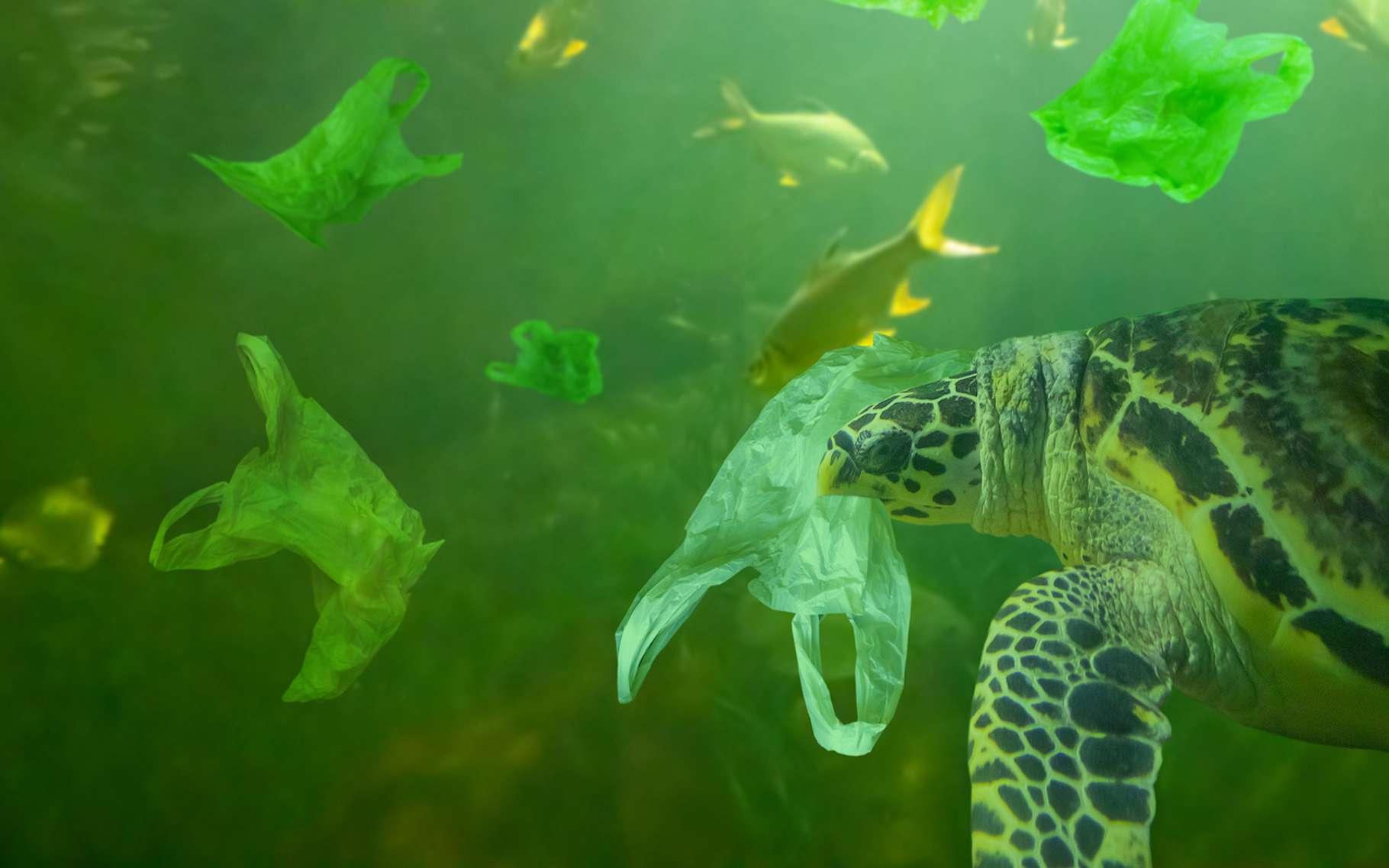 Les pays du G20 se sont engagés à réduire leurs déchets plastiques afin de diminuer la pollution plastique des milieux marins. © Piman Khrutmuang, Fotolia