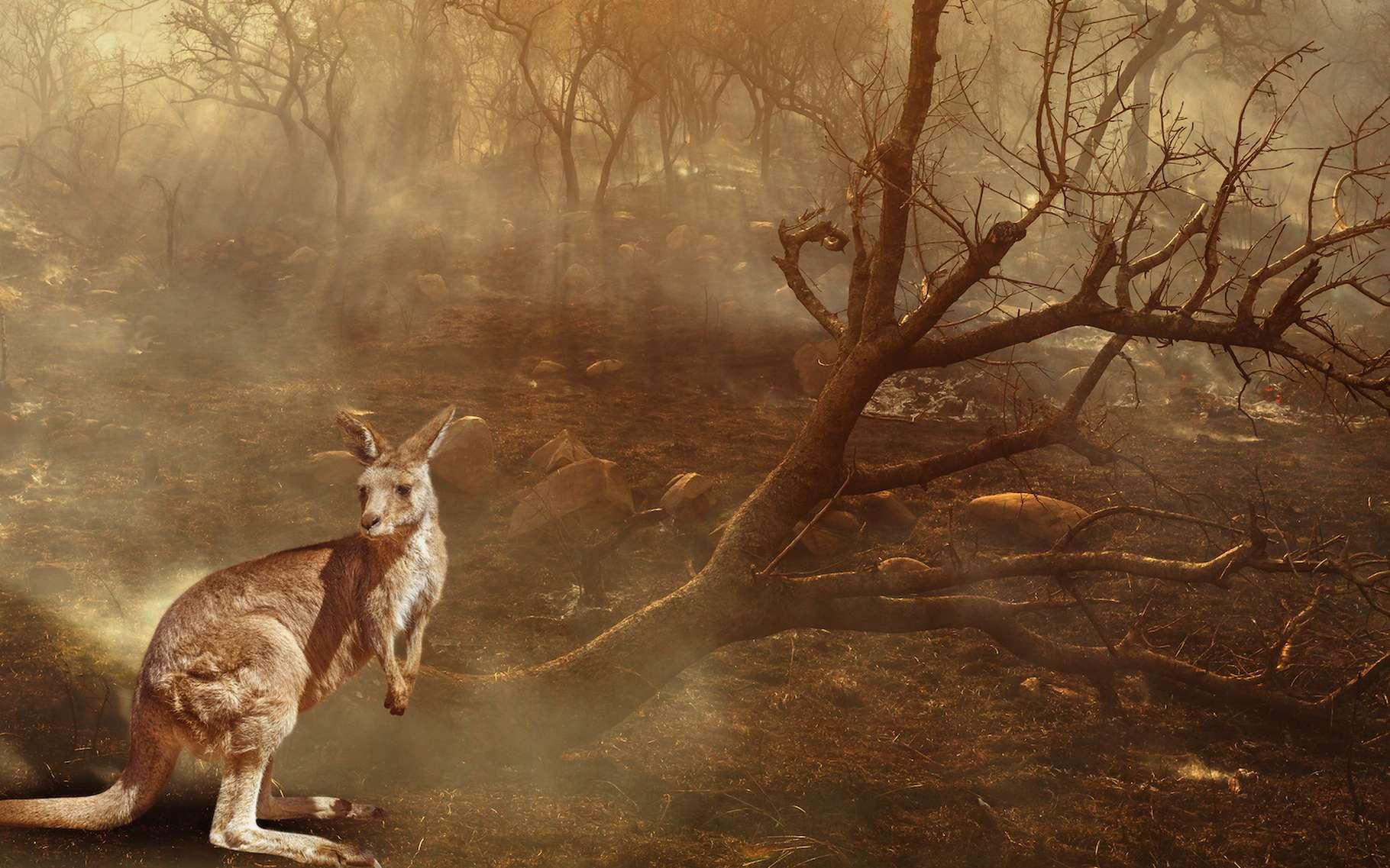 Les chercheurs estiment que 1,25 milliard d'animaux sont morts dans les feux de brousse qui ravagent l'Australie depuis le mois de septembre 2019. © bennymarty, Adobe Stock