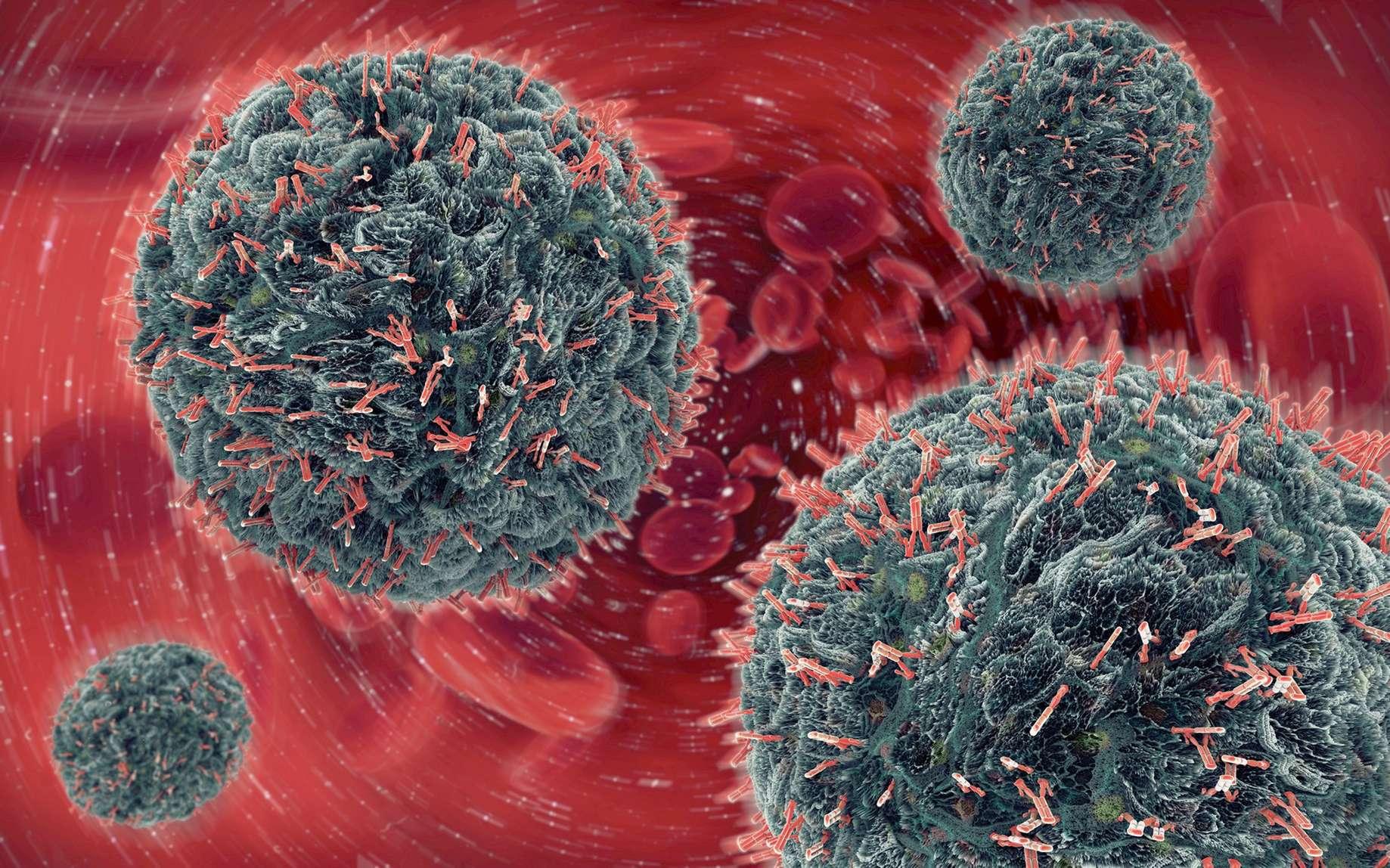Lors d'une infection virale, le système immunitaire crée des anticorps. Ce sont ces anticorps qui sont recherchés dans les tests sérologiques. Dans le cas du Covid-19, leur sensibilité n'est pas suffisante. © Christophe Burgstedt, Fotolia