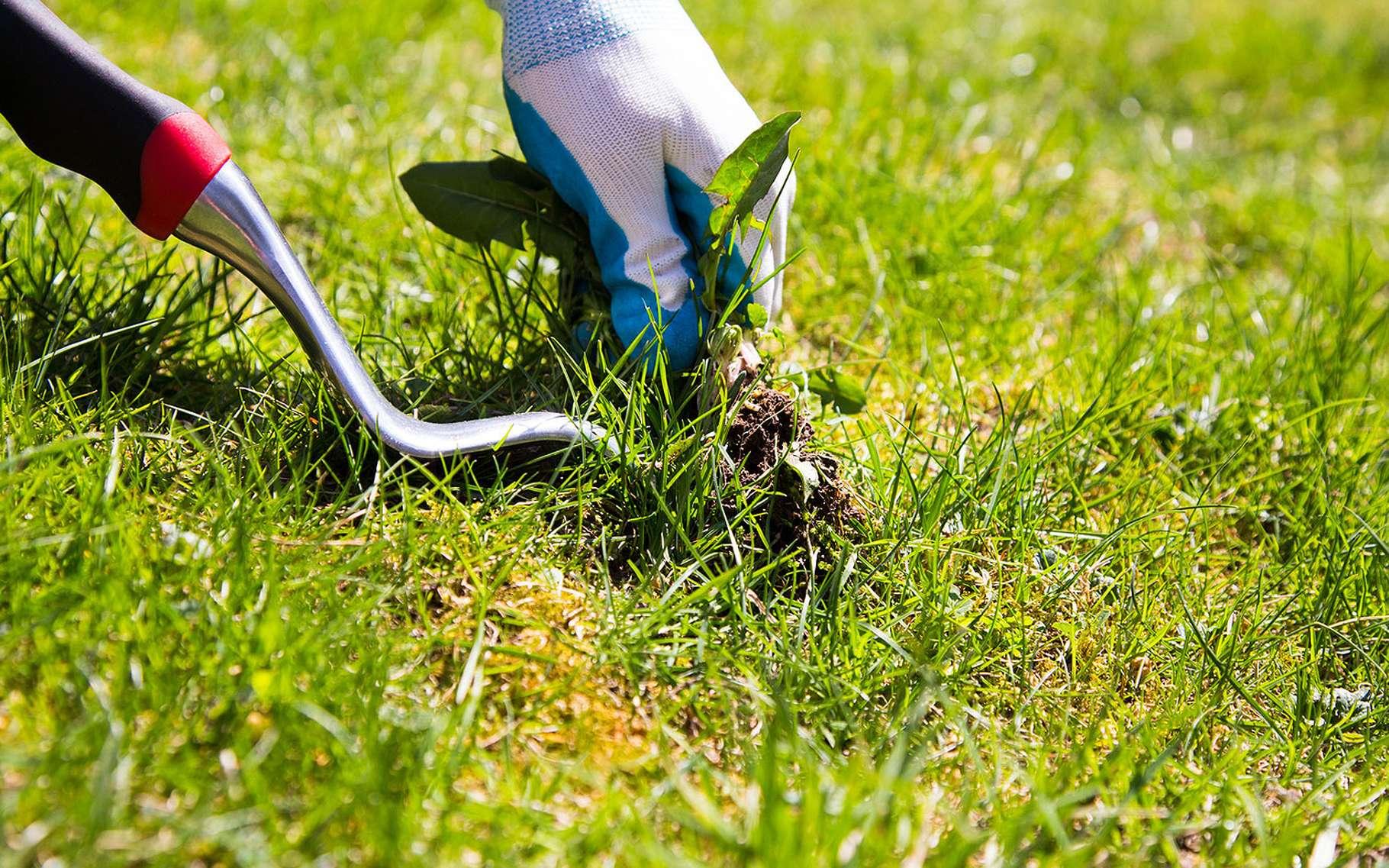 Comment désherber sans utiliser un herbicide. © Amyinlondon, Fotolia
