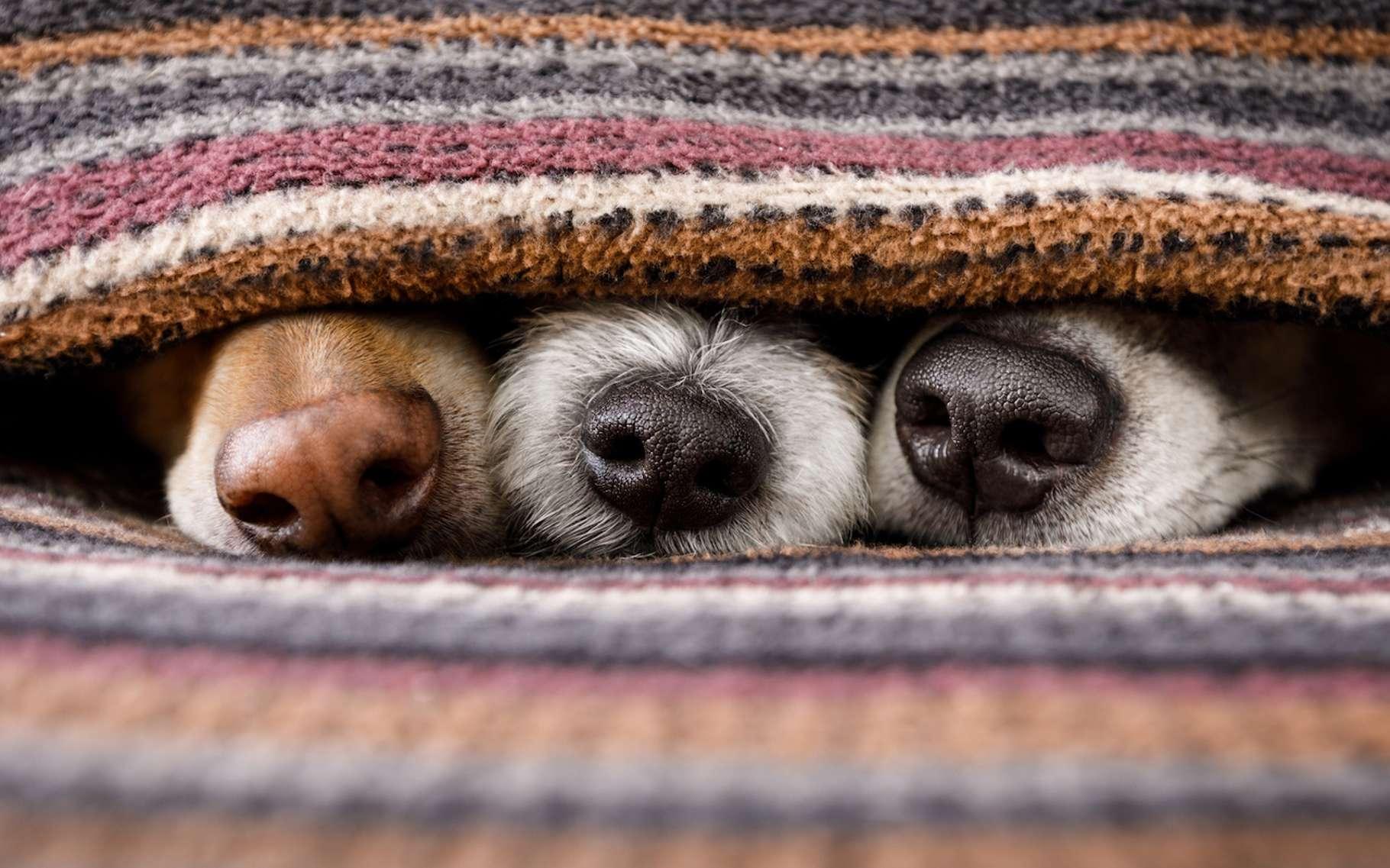 Lorsque les températures descendent, vous pouvez aider votre chien à mieux supporter le froid. © Javier brosch, Fotolia
