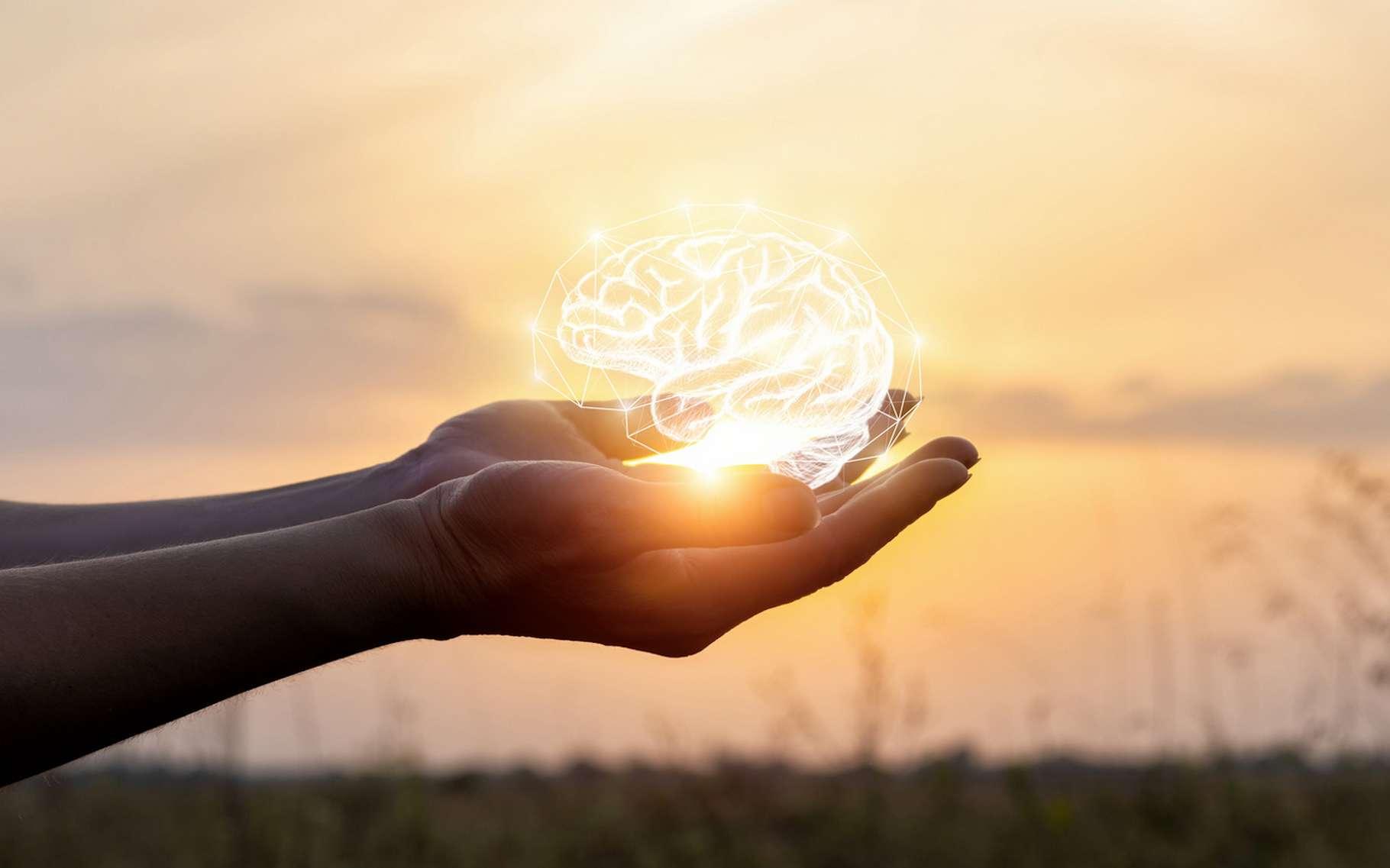 Selon des chercheurs de l'université de Cambridge (États-Unis), inutile de vouloir avoir le cerveau le plus gros. Car, au-delà d'une taille idéale, ses performances s'amoindrissent. © natali_mis, Fotolia