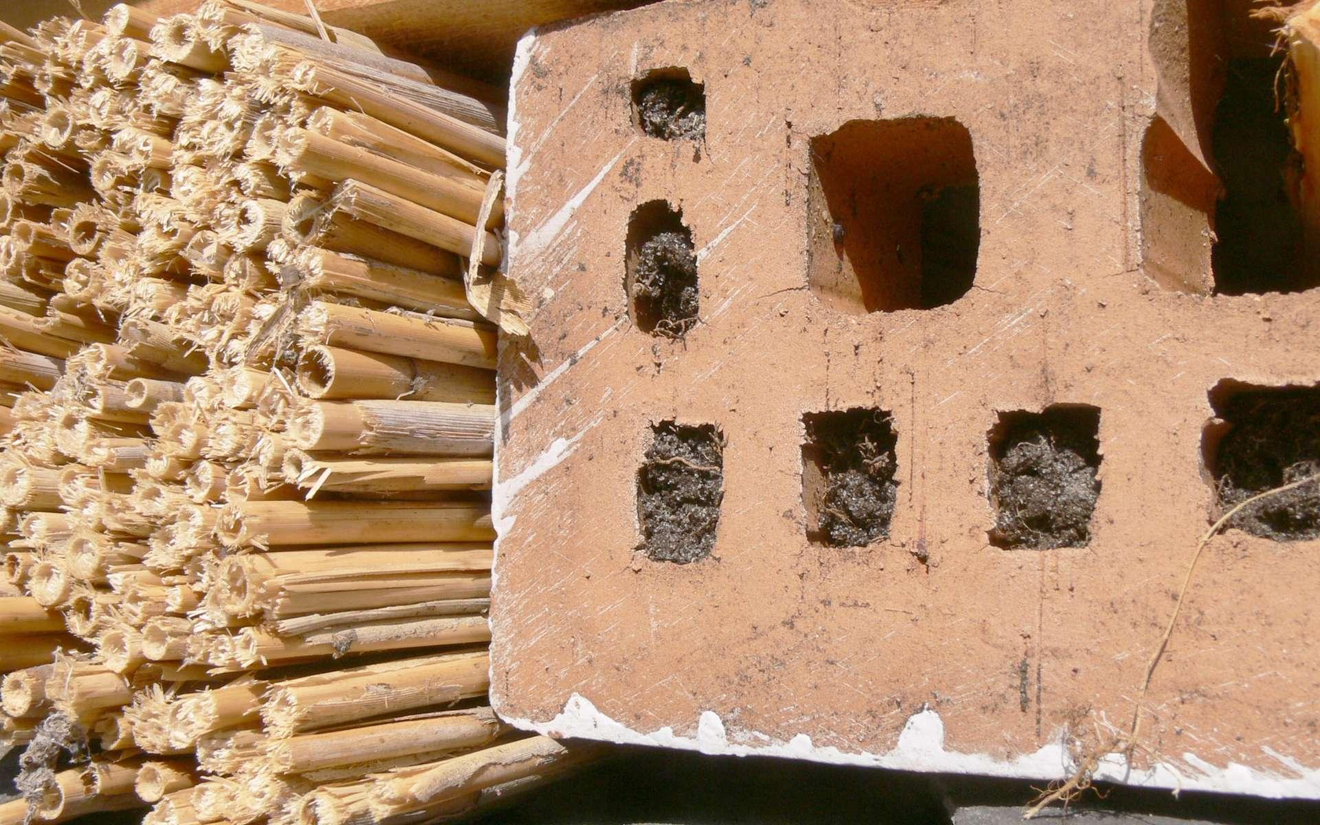 L'installation d'un nichoir à insectes favorise leur colonisation du jardin à la belle saison © Lamiot, Wikimedia Commons, cc by sa 3.0