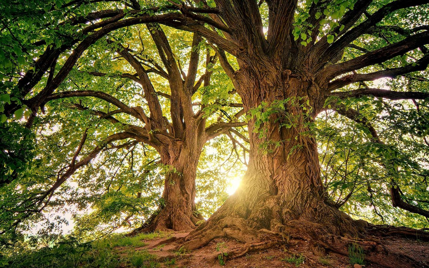 Les arbres stockent le CO2 et aident ainsi à lutter contre le réchauffement climatique. Mais, l'équation pourrait ne pas être aussi simple. © jplenio, Pixabay, CC0 Creative Commons