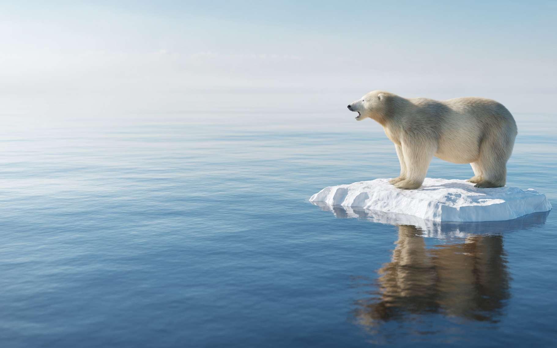 Chaque année, la glace de la banquise arctique semble fondre un peu plus sous l'effet du réchauffement climatique. © Photocreo Bednarek, Adobe Stock