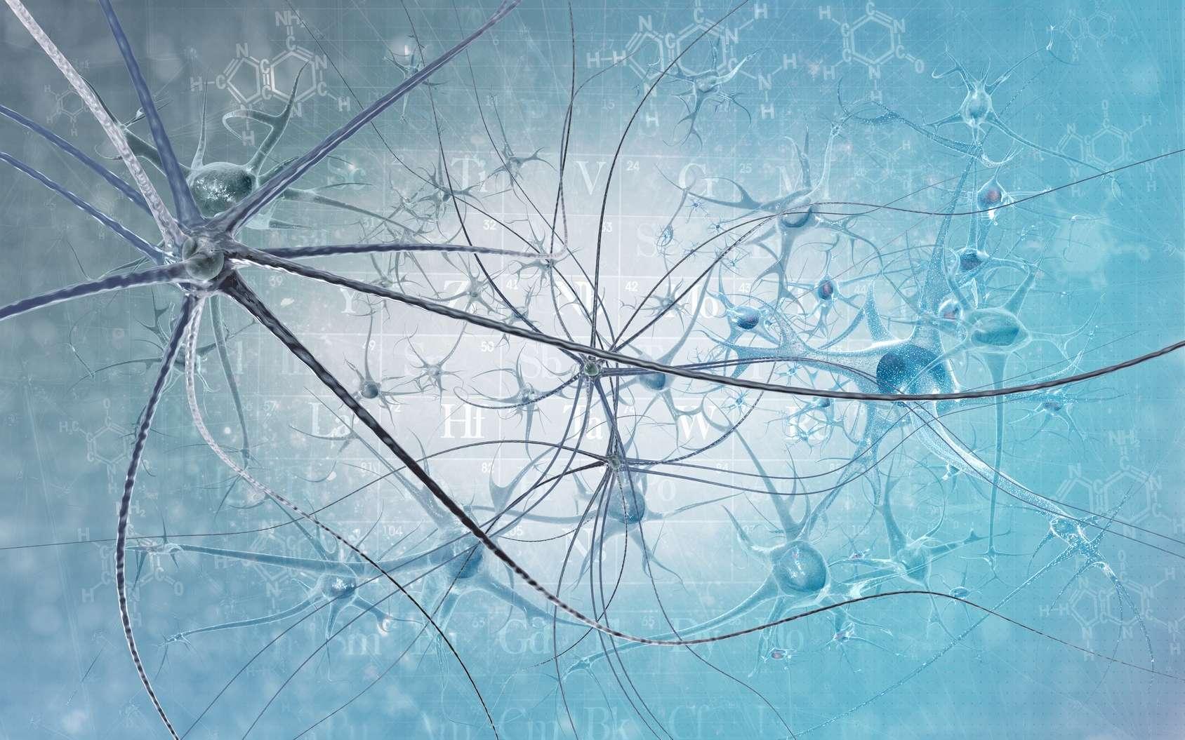 À première vue, un neurone ne ressemble pas vraiment à un lymphocyte… © vitstudio, Fotolia