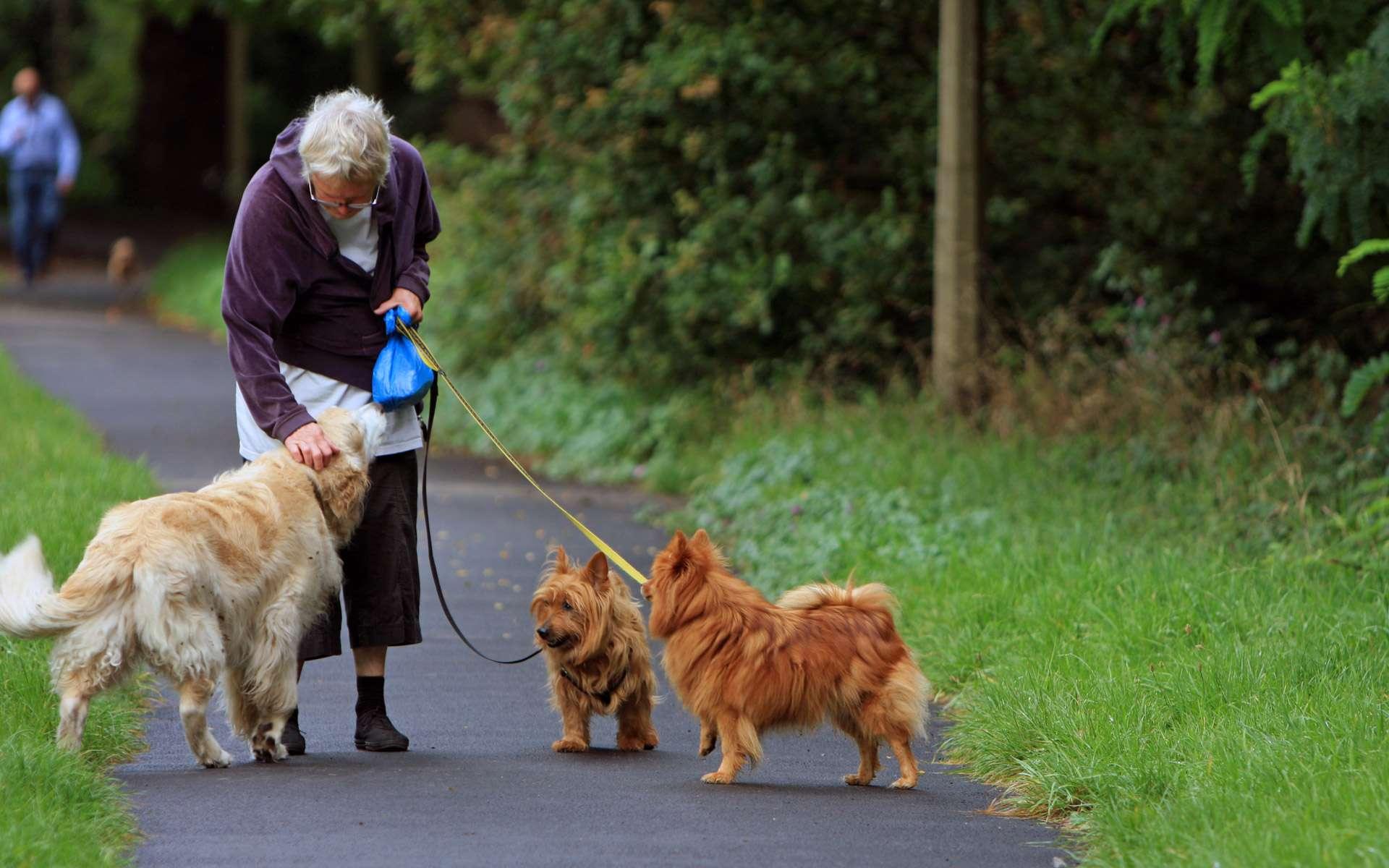Cette promeneuse de chien, à Londres, semble savoir communiquer avec la gent canine. © Domaine public