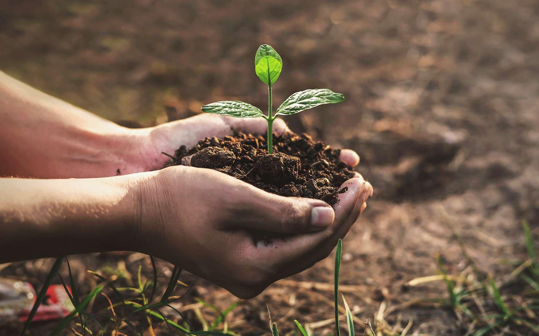 Pour Bruno David, la « biodiversité invisible » est peut-être la plus importante à préserver. Ainsi les sols, notamment, jouent un rôle central dans le système terre. © Krailas, Adobe Stock