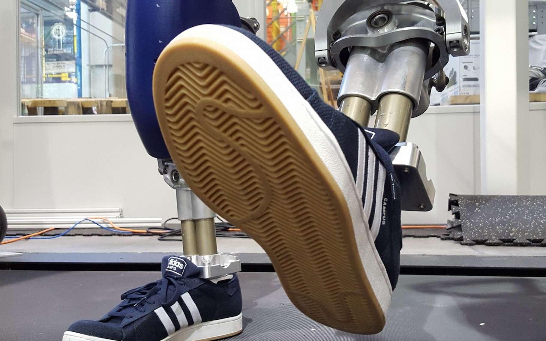 Chaussé de ses baskets, Durus, le robot bipède de l'Amber Lab, est capable de marcher avec une aisance quasi humaine. © Christian Hubicki, Georgia Tech