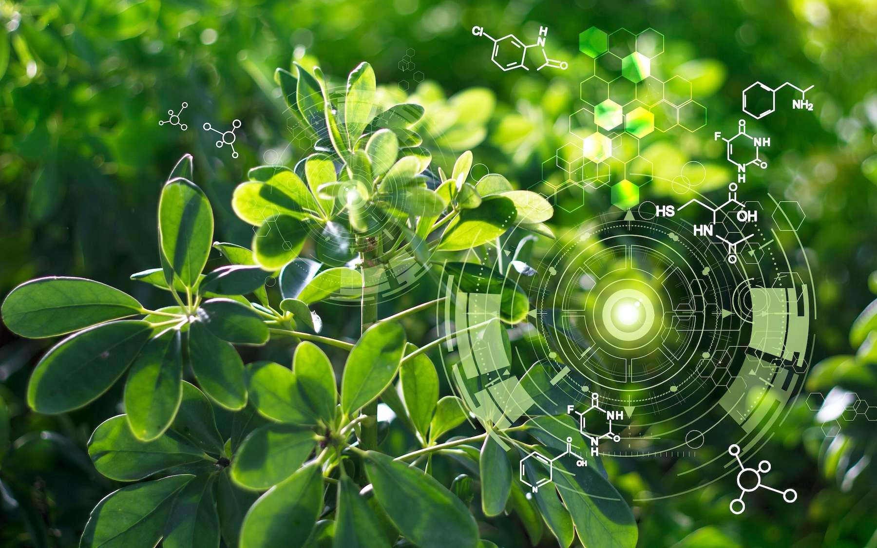 Des plantes qui fabriquent en grande quantité des anticorps ou des enzymes, c'est possible ! © ipopba, Adobe Stock