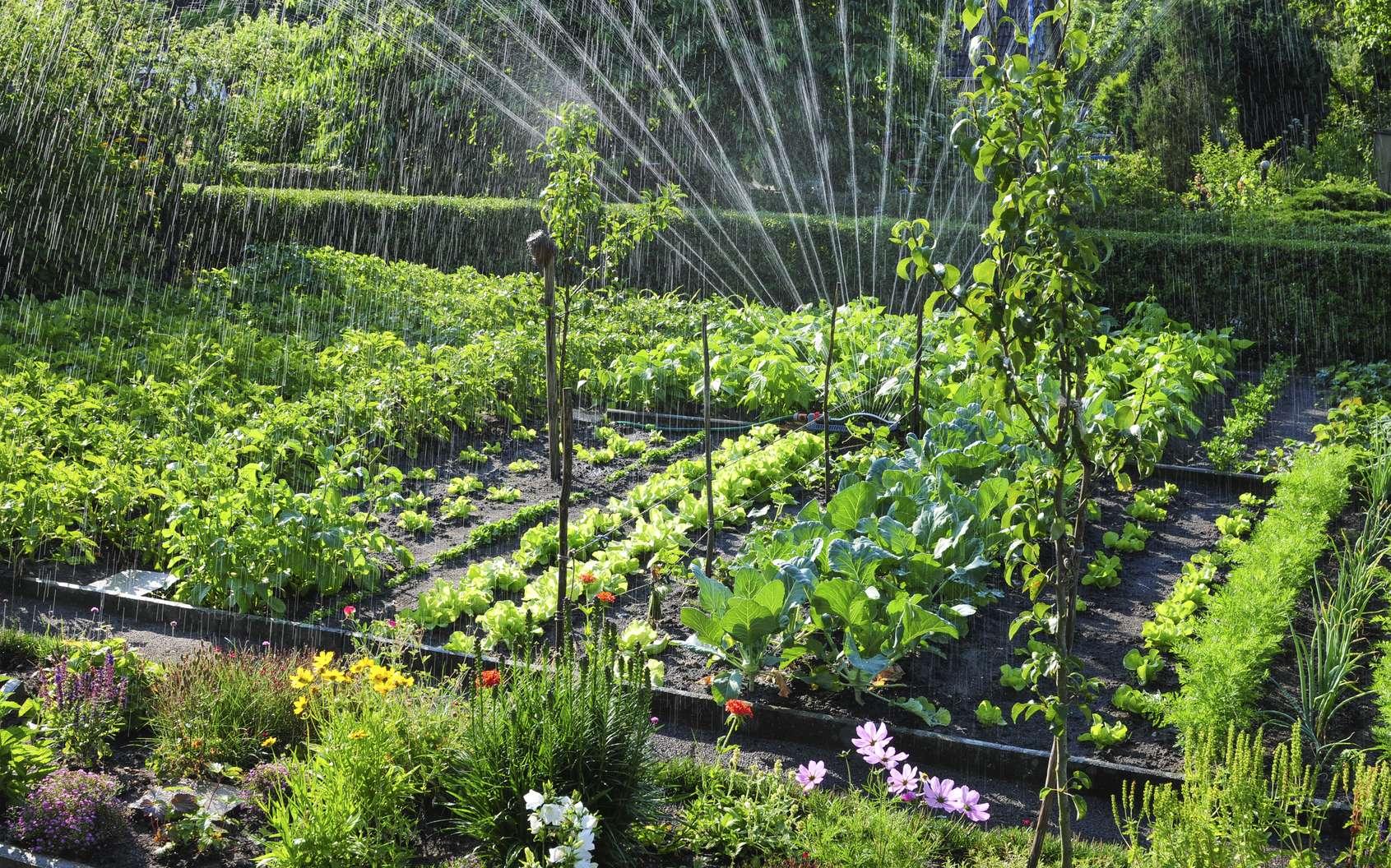 Un beau potager démarre en mai avec des semis de légumes réussis. © schulzie, Adobe Stock
