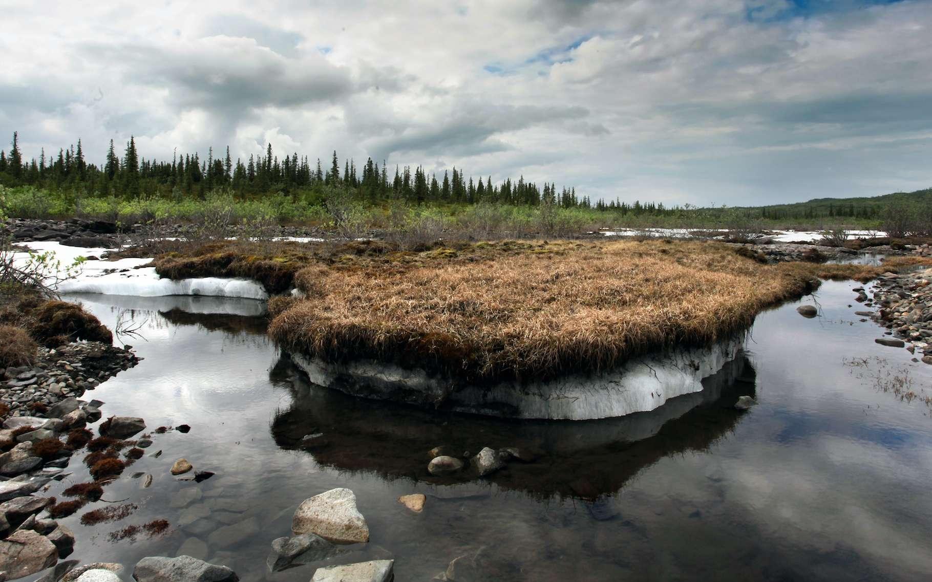 Un dégel du pergélisol a déjà libéré, en 2016 en Sibérie, des bacilles responsables de la maladie du charbon — l'anthrax comme l'appellent les anglophones — qui ont infecté des humains. © Alexander, Adobe Stock