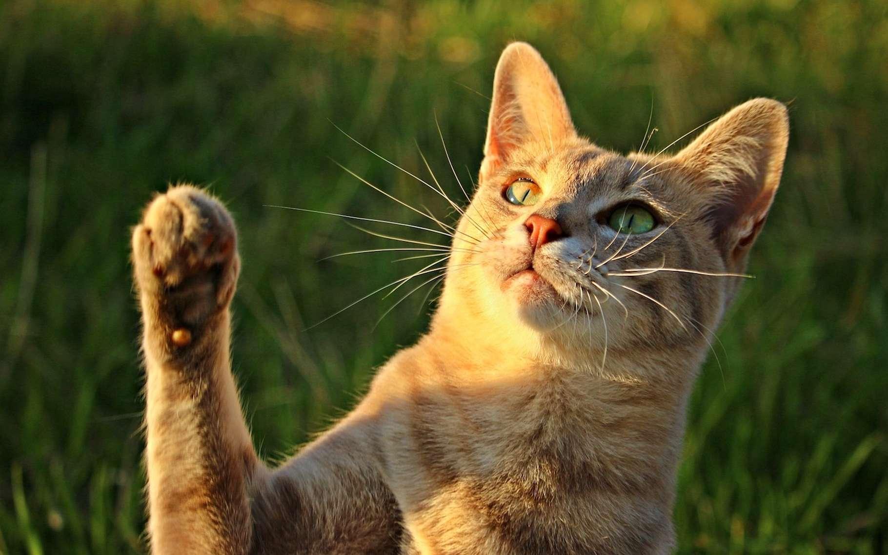 Les animaux aussi montrent une préférence pour la gauche ou la droite. © rihaij, Pixabay, CC0 Creative Commons
