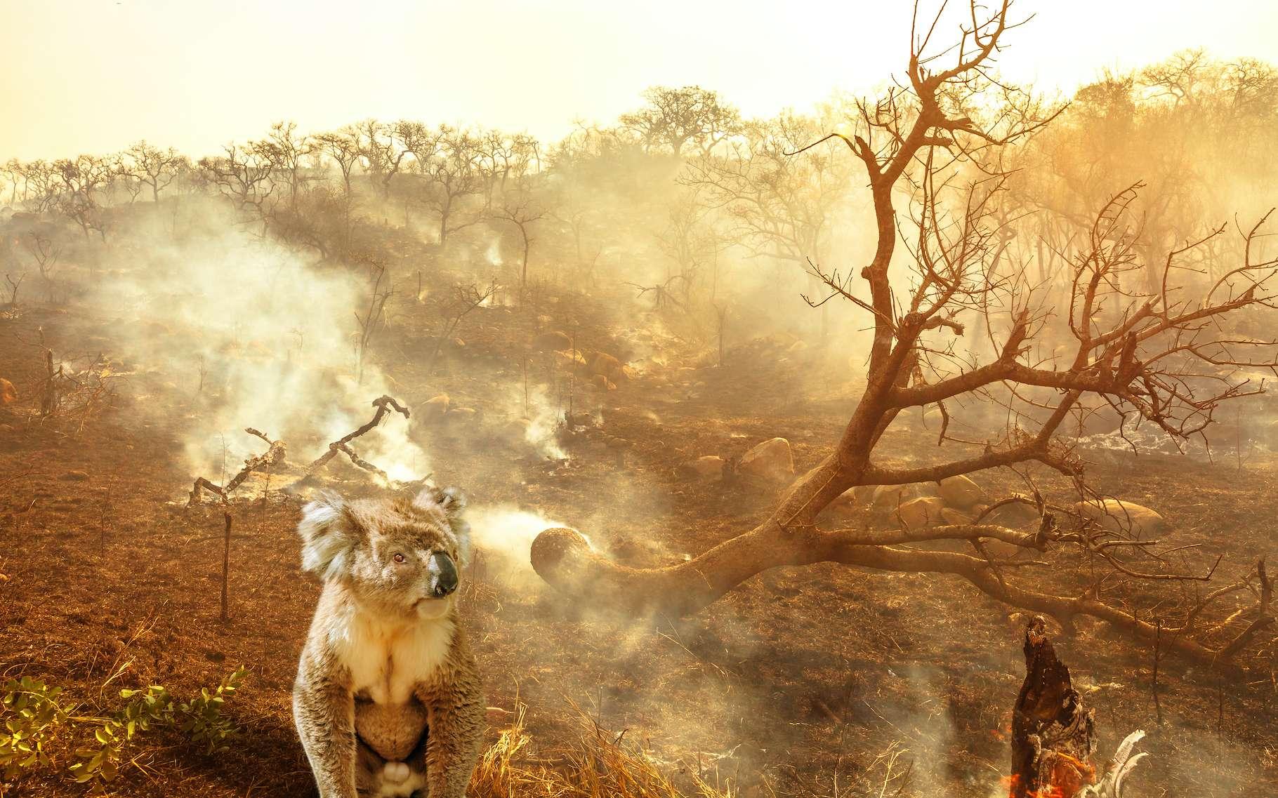L'Australie doit se préparer à vivre des évènements extrêmes plus intenses. © bennymarty, Adobe Stock