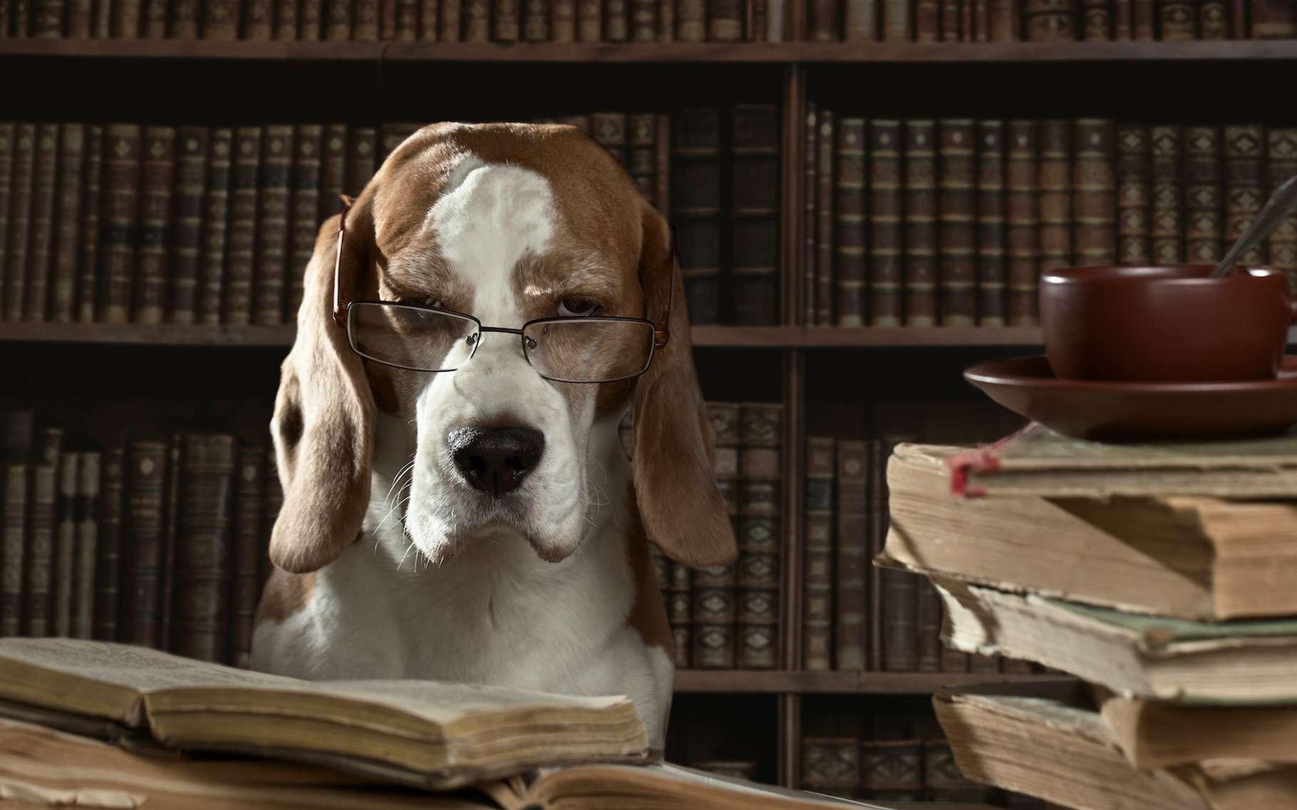 Le chien ne s'attarderait pas à différencier tous les sons d'un mot. De quoi limiter sa capacité à enrichir son vocabulaire. Heureusement, notre meilleur ami sait aussi nous comprendre sans même que nous ayons à ouvrir la bouche… pas si bête. © Igor Normann, Adobe Stock