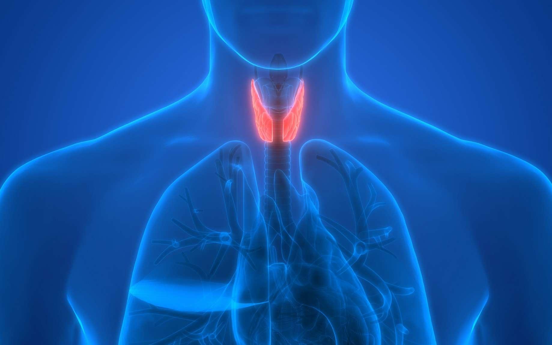 La thyroxine est une hormone produite par la thyroïde. © magicmine, Fotolia