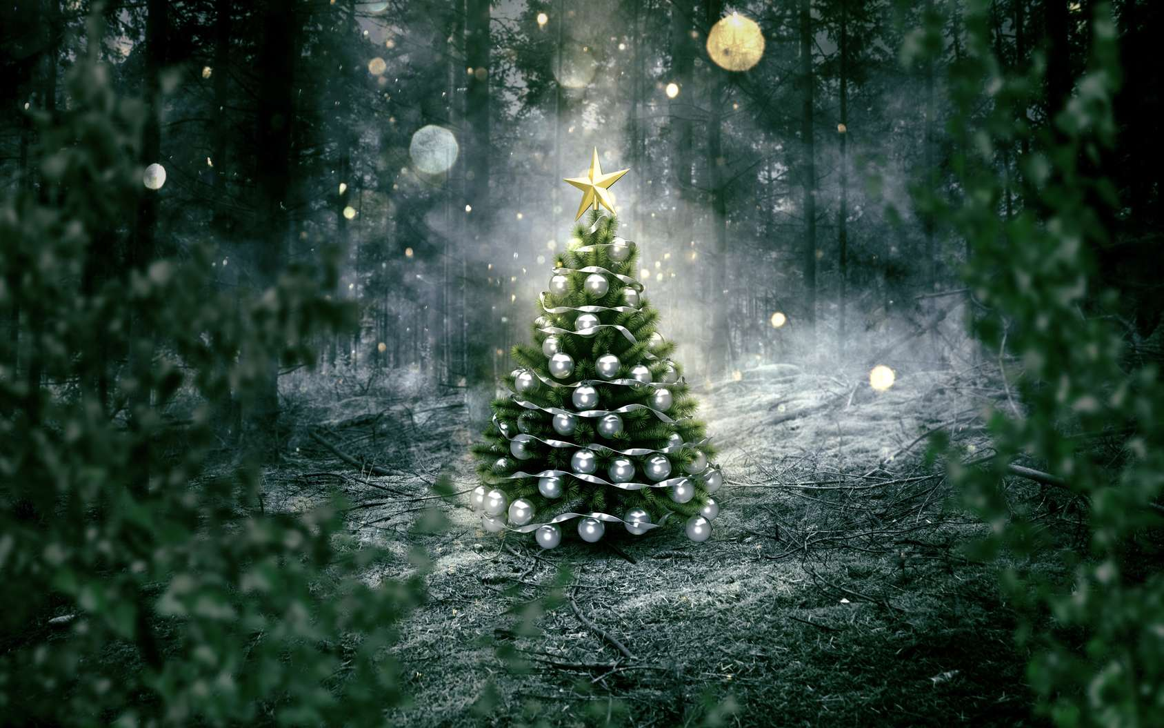 Le sapin Nordmann est le sapin de Noël préféré des Français depuis plusieurs années. © lassedesignen, Fotolia