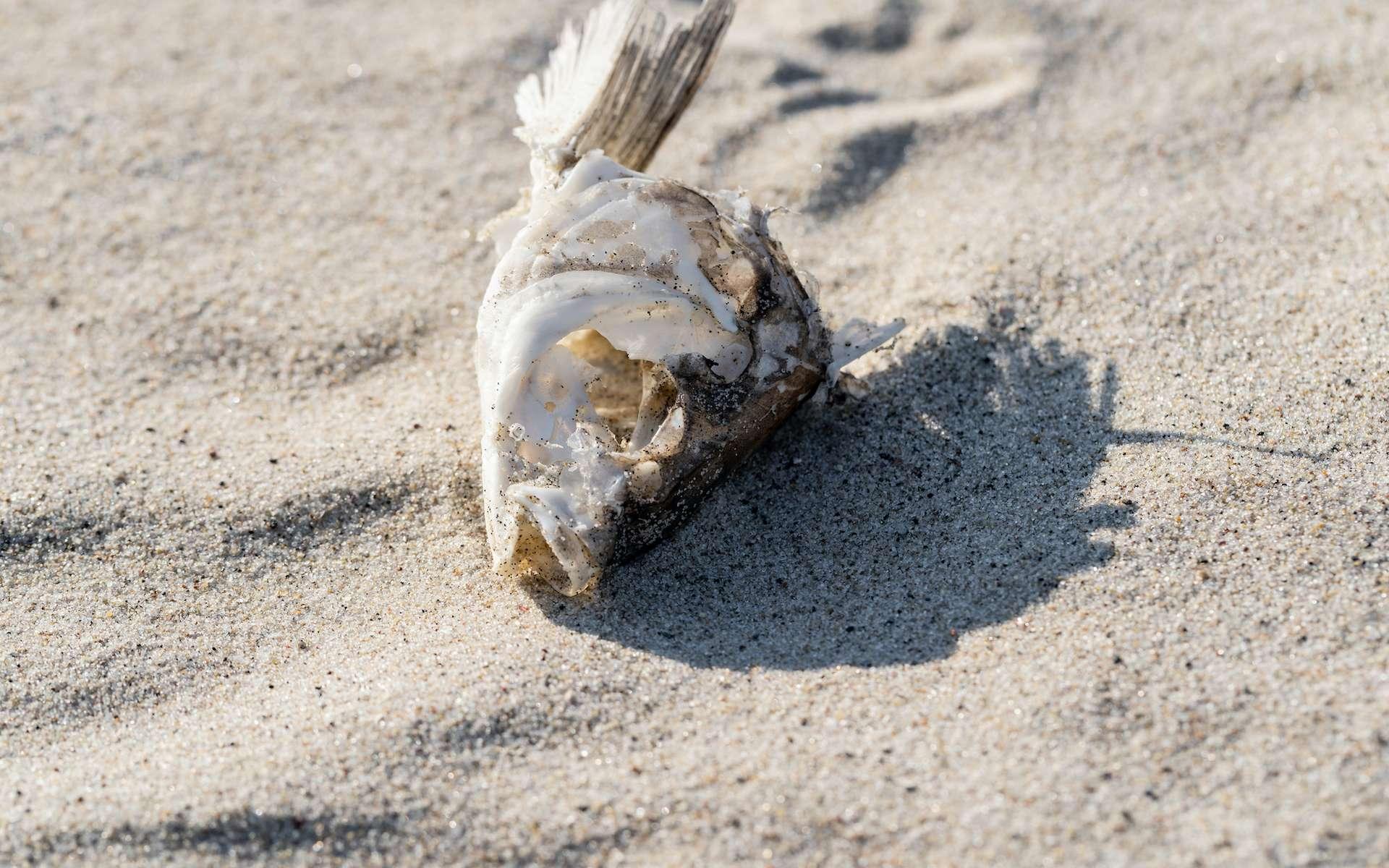 Le poisson était à la base de l'alimentation des habitants de l'Afrique du Nord à l'époque de l'Holocène. © Dmitriy Popov, Adobe Stock