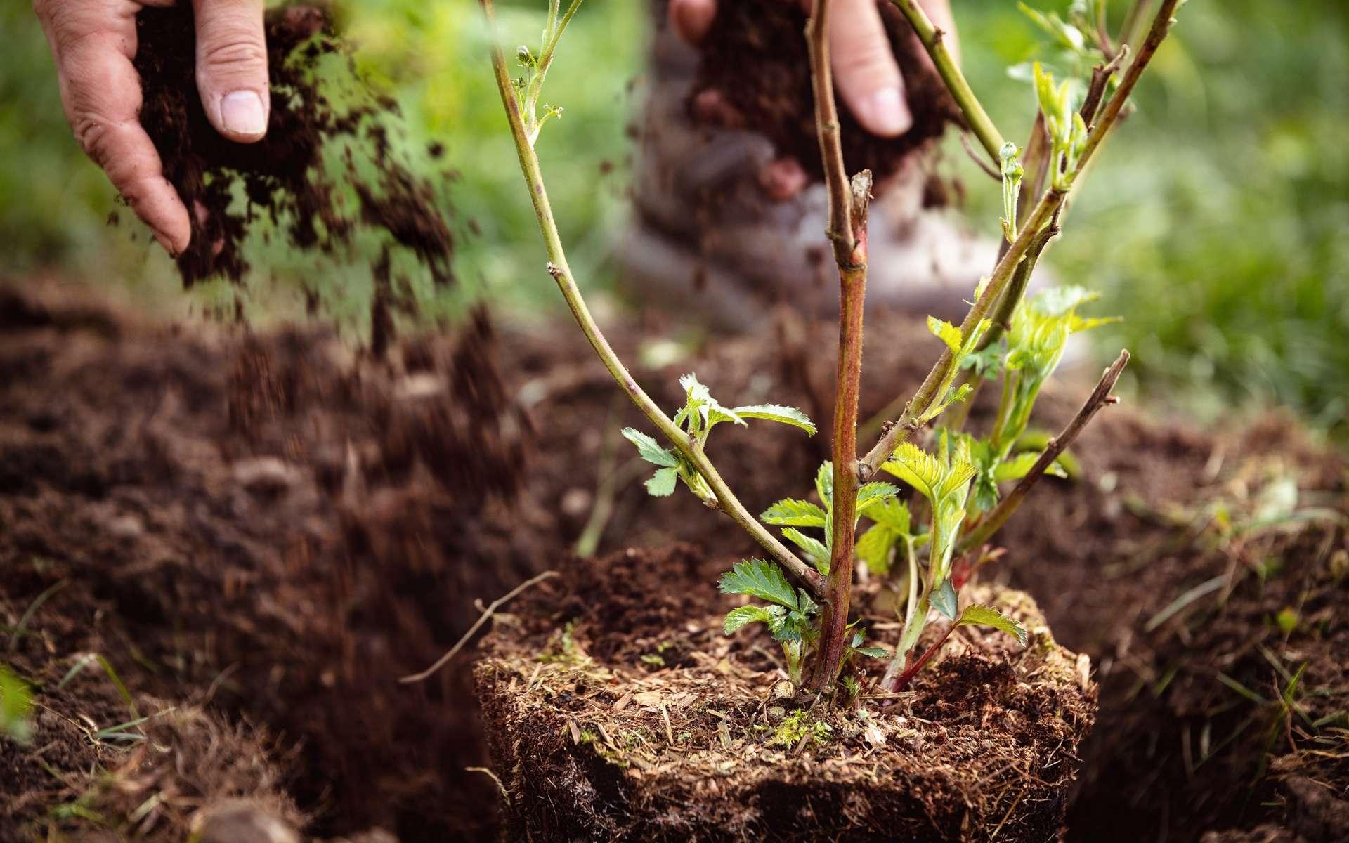 L'horticulture regroupe de nombreuses spécialités comme la floriculture, le maraîchage, l'arboriculture ou encore le paysagisme. © M.Dörr & M.Frommherz, Adobe Stock.