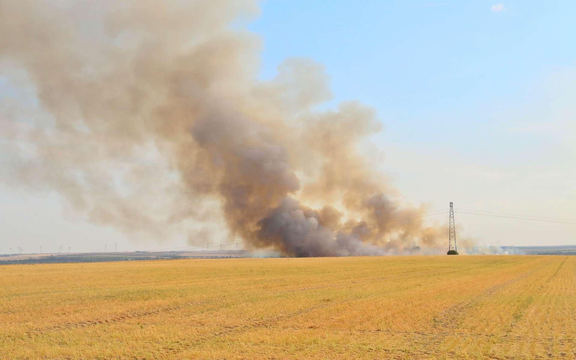 L'expansion des tropiques pourrait être responsable d'une multiplication des feux sauvages dans des zones fragiles. © PxFuel