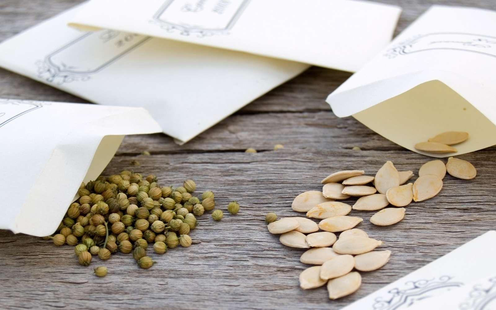 Réussir ses semences de légumes. © monamakela, Adobe Stock