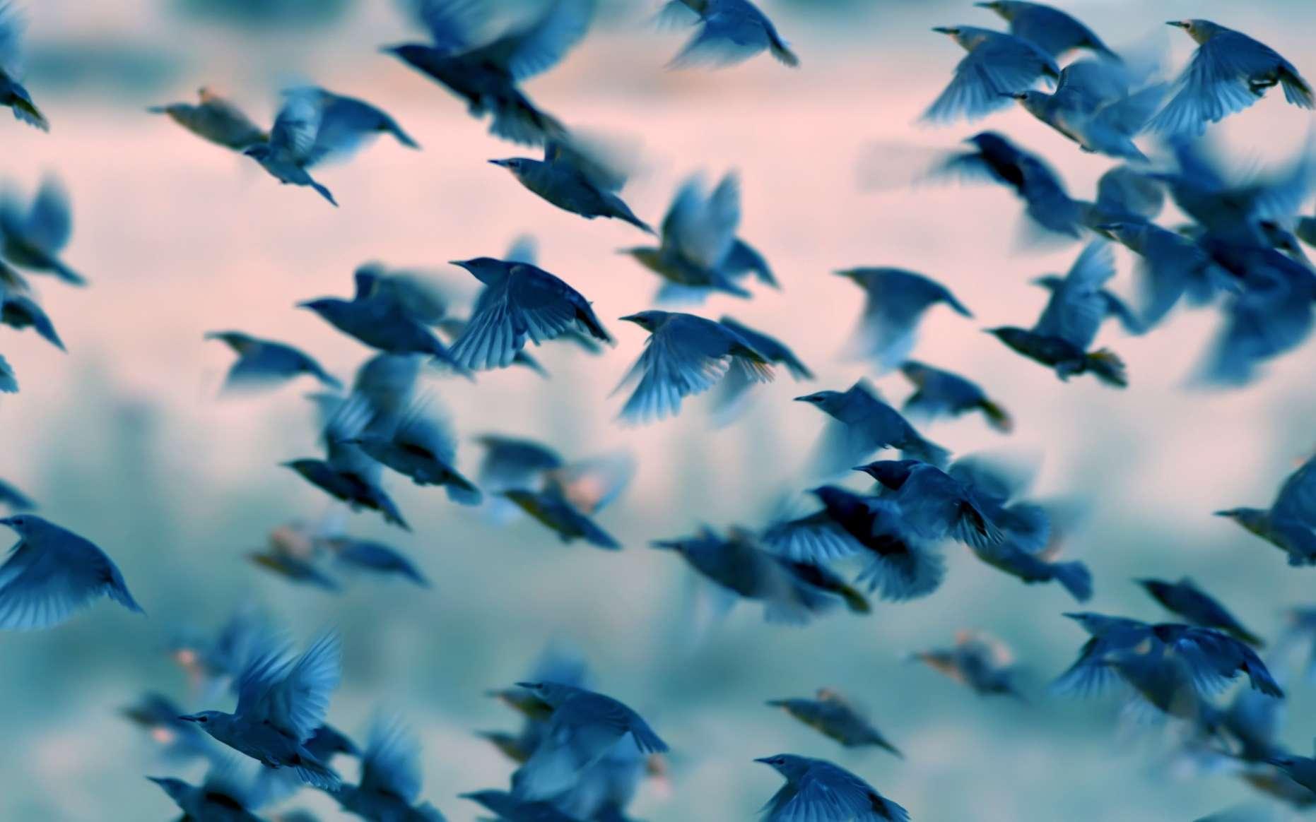 Il y aurait 50 millards d'oiseaux sur la planète. © SerkanMutan, Adobe Stock