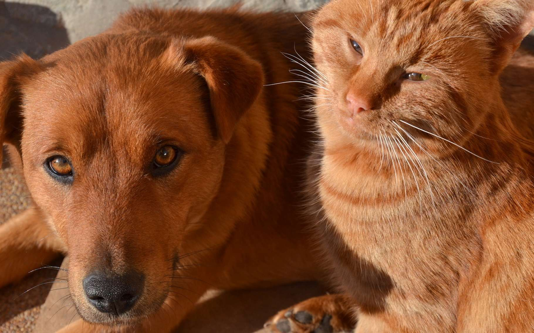 Comme leurs amis les Hommes, les animaux souffrent de la chaleur. © terezqua, Fotolia