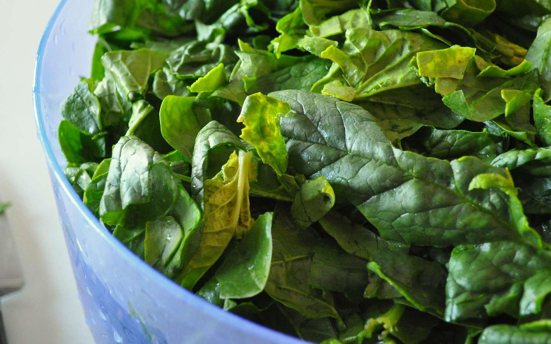 Les épinards sont riches en fer, en antioxydants, en vitamines et en minéraux. Ils sont excellents pour la santé. Et avec une dose de nanotubes de carbone en plus, ils pourraient devenir aussi d'excellents détecteurs d'explosifs! © Frédérique Voisin-Demery, Flickr, CC by 2.0
