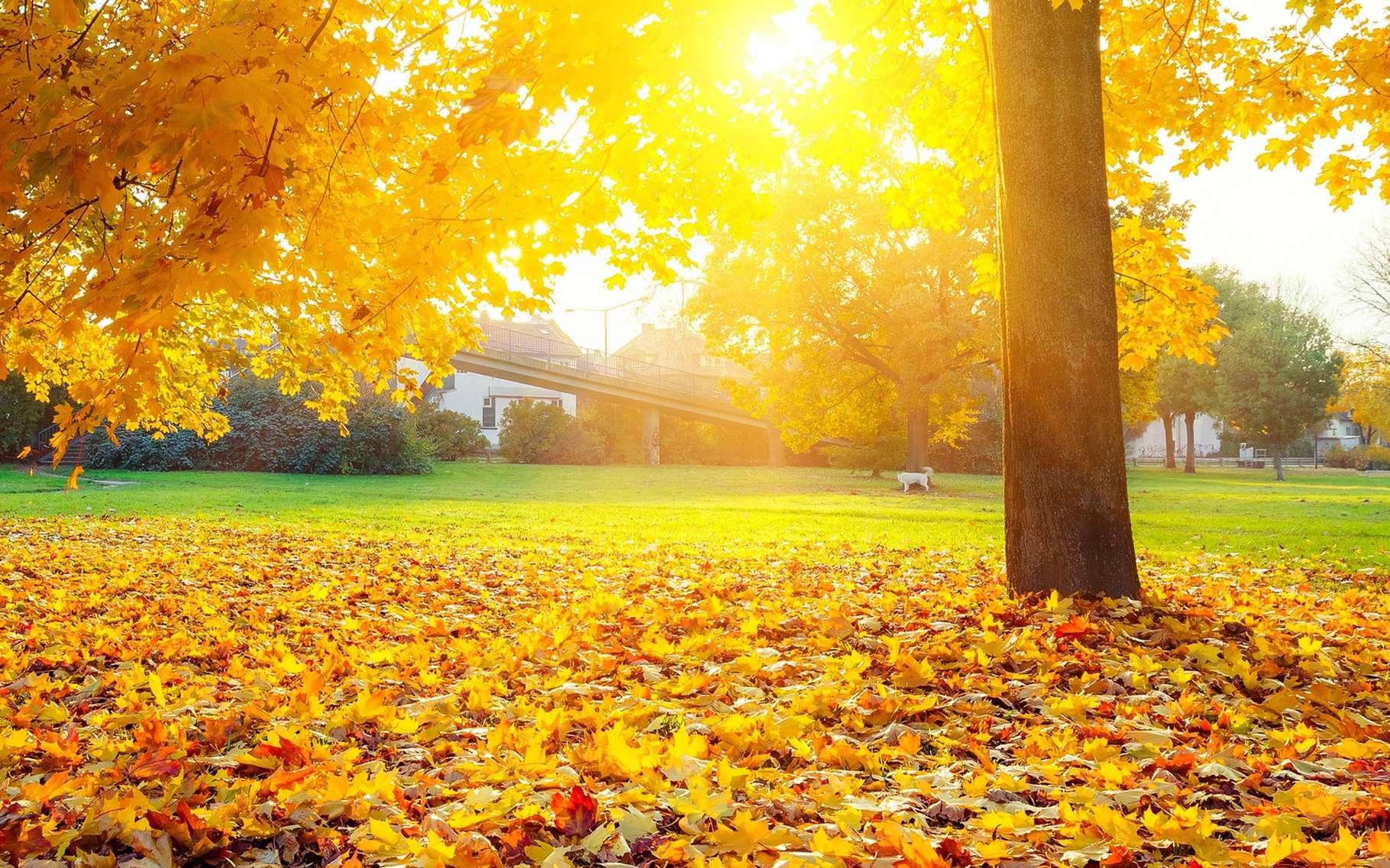 L'automne débute à l'équinoxe du même nom, le 21, le 22 ou le 23 septembre, selon les années. © Hagens_World flickr 2.0