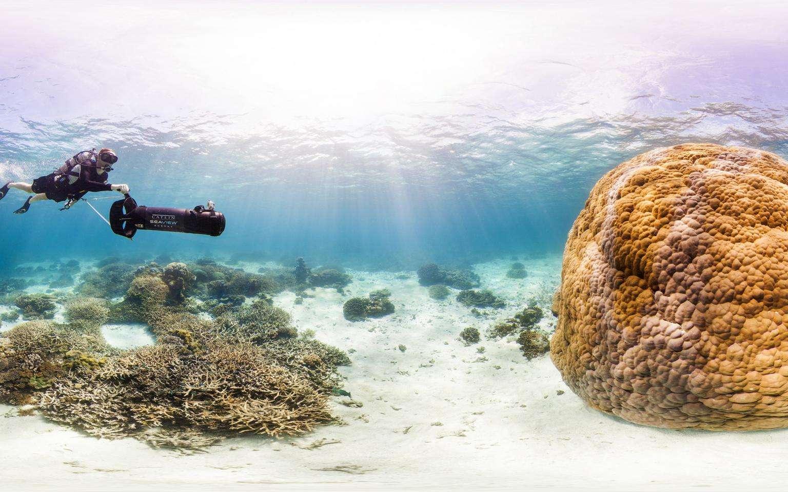 Philippe Cousteau en plongée avec le Catlin Seaview Survey en Australie sur le récif corallien de Wilson Island. © Catlin Seaview Survey