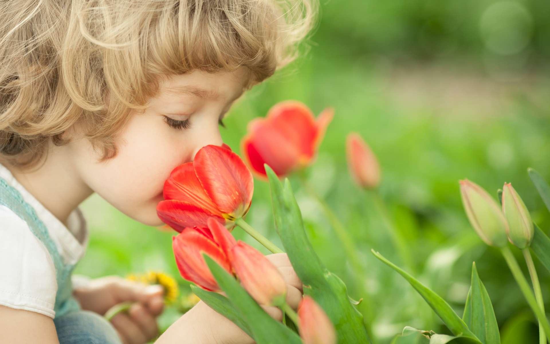 L'odorat est un sens développé chez de nombreuses espèces. © Sunny studio, Adobe Stock