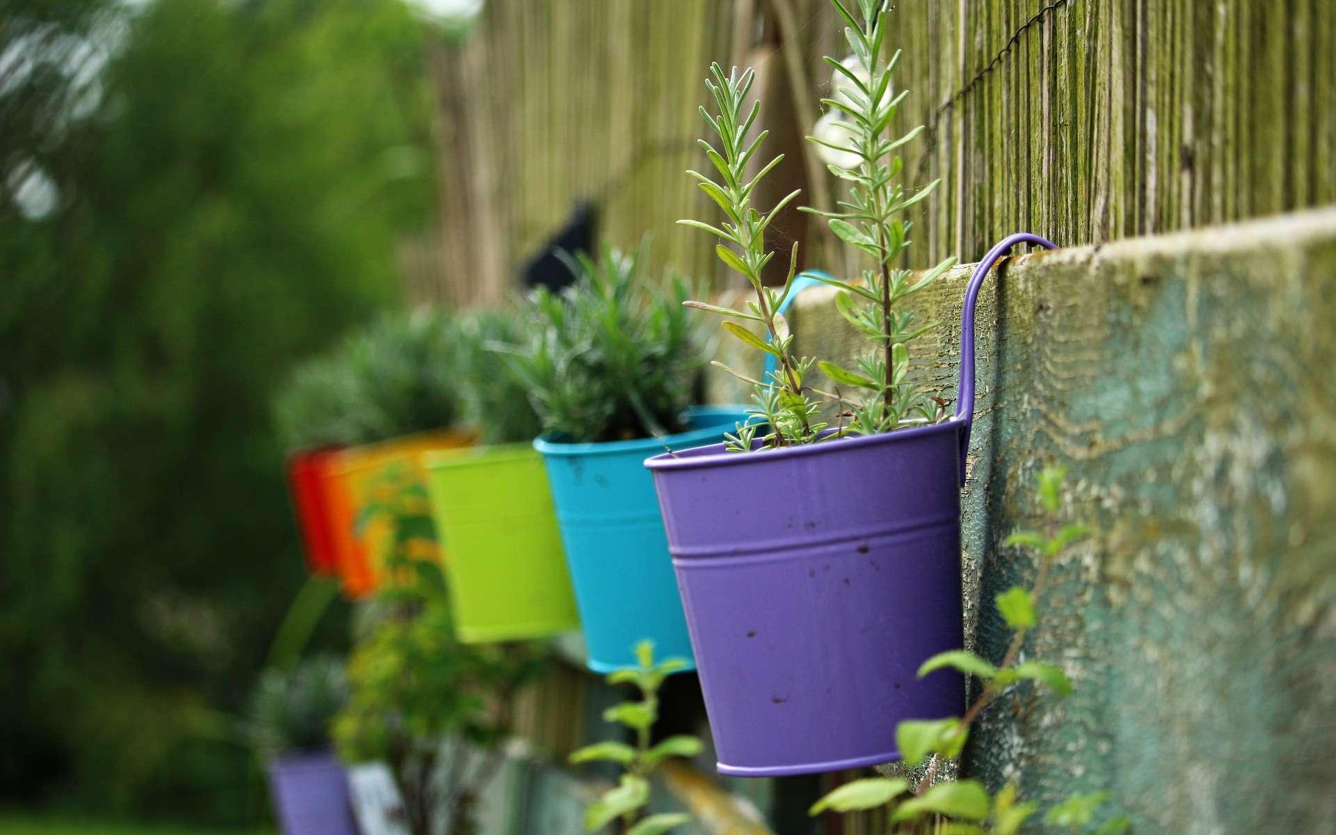 Planter Herbes Aromatiques Jardiniere 9 plantes médicinales à cultiver chez soi